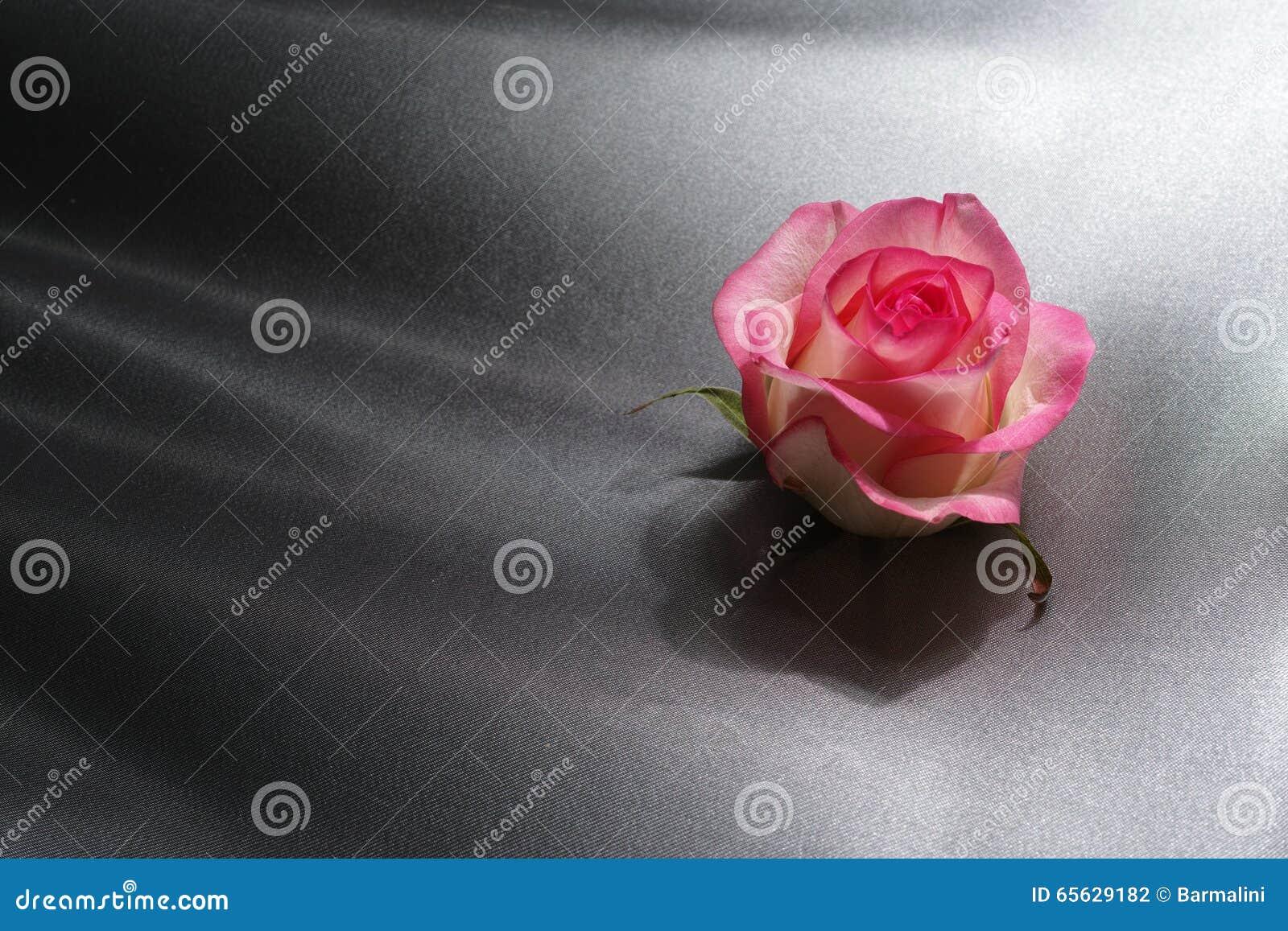 Valentine du concept de fête des mères, rose de rose sur le fond gris en soie