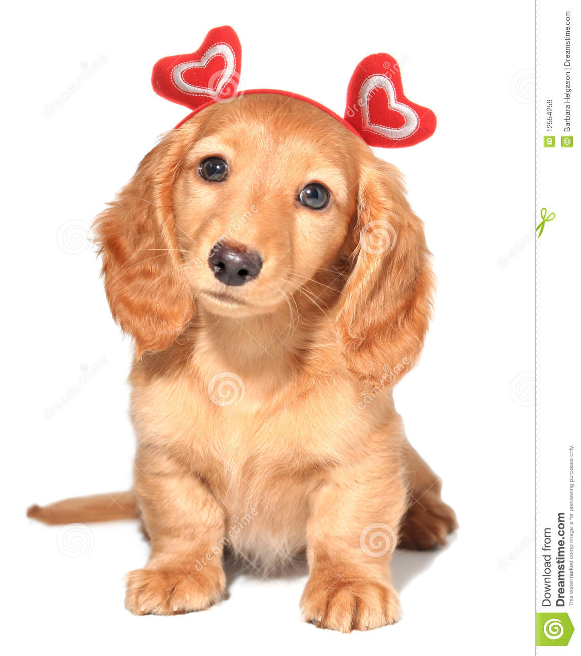 Valentine puppy royalty free stock images image 12554259 - Valentines day pictures with puppies ...