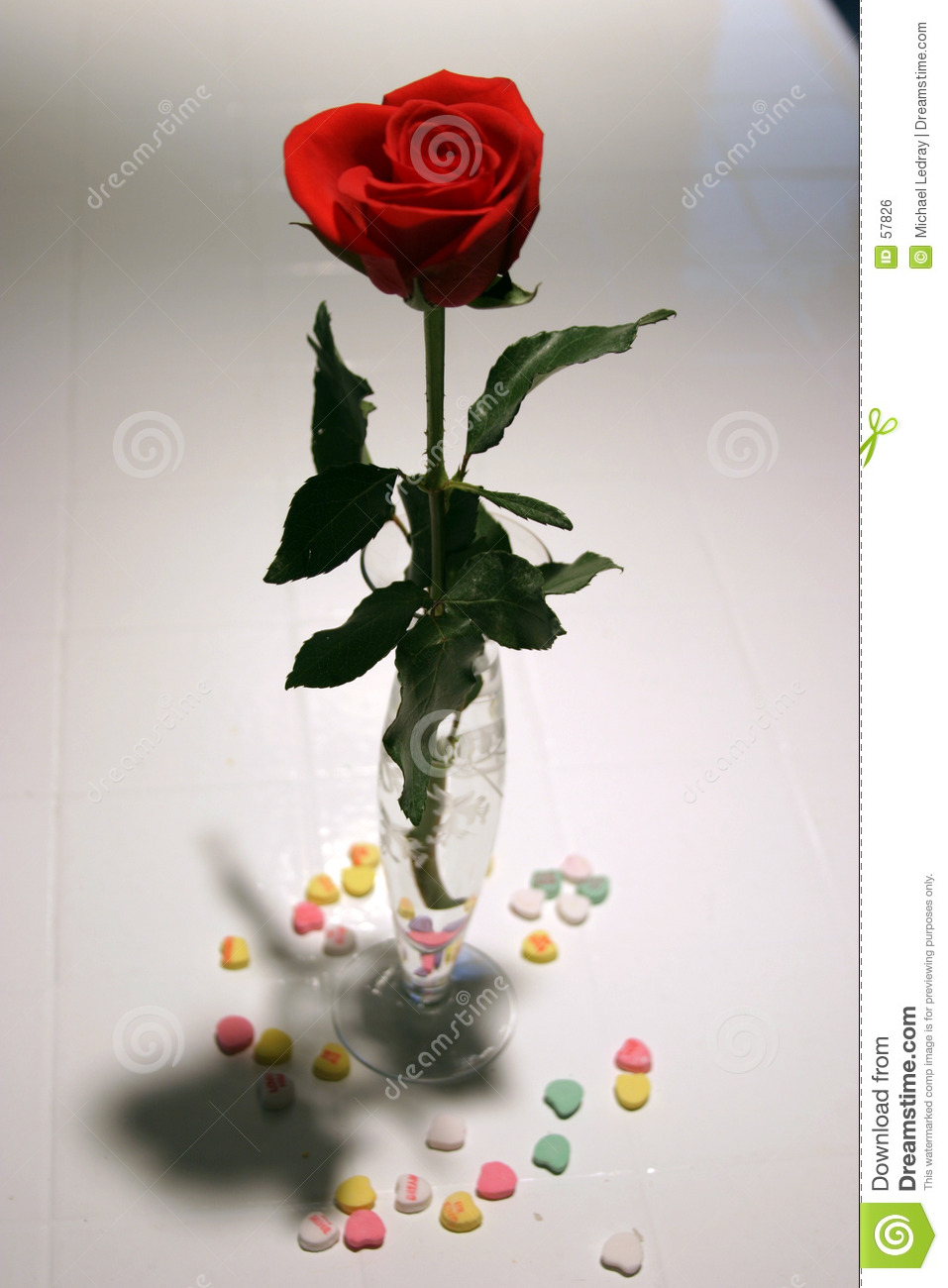 valentine rose royalty free stock image  image, Beautiful flower