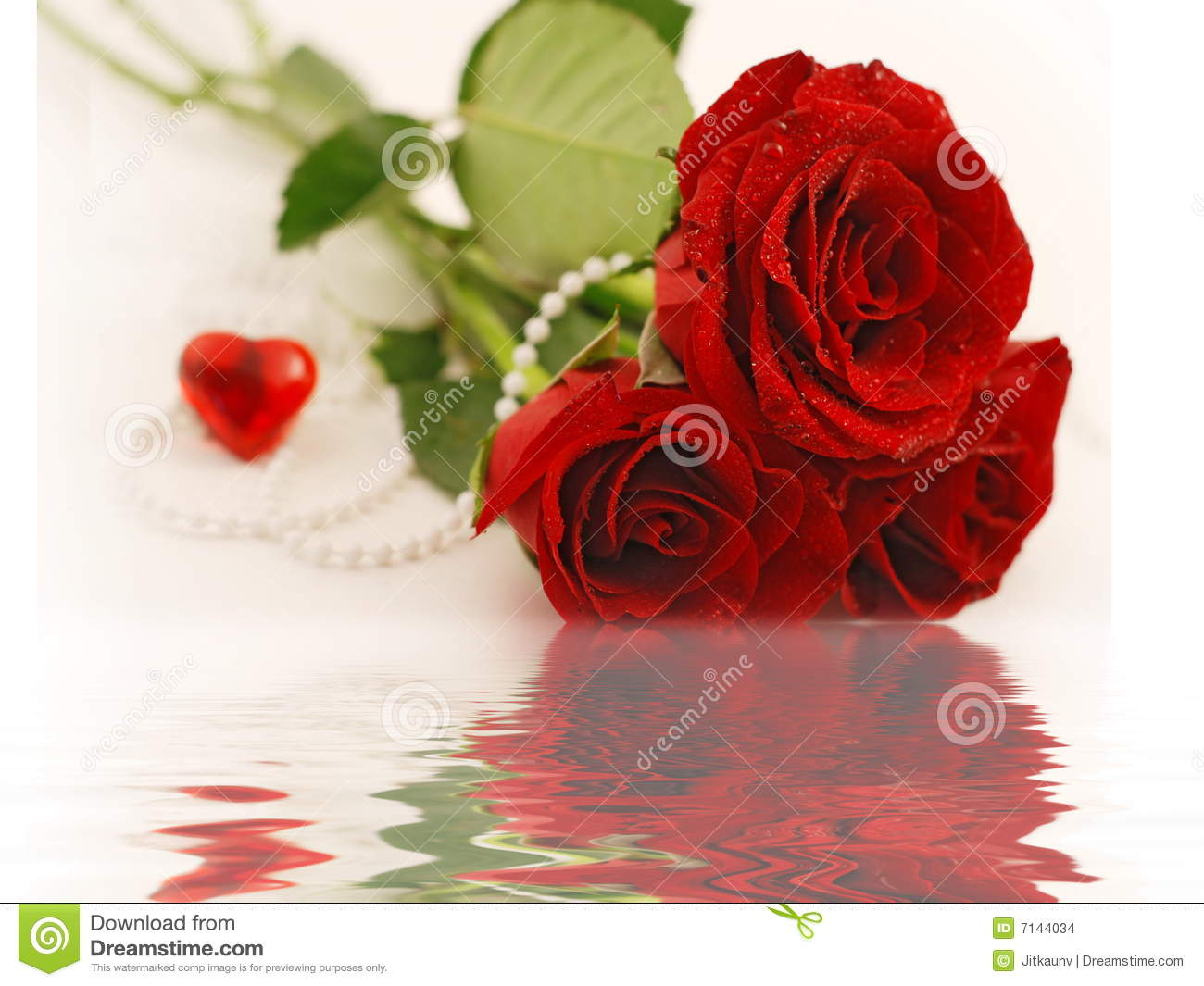 valentine rose stock images  image, Natural flower