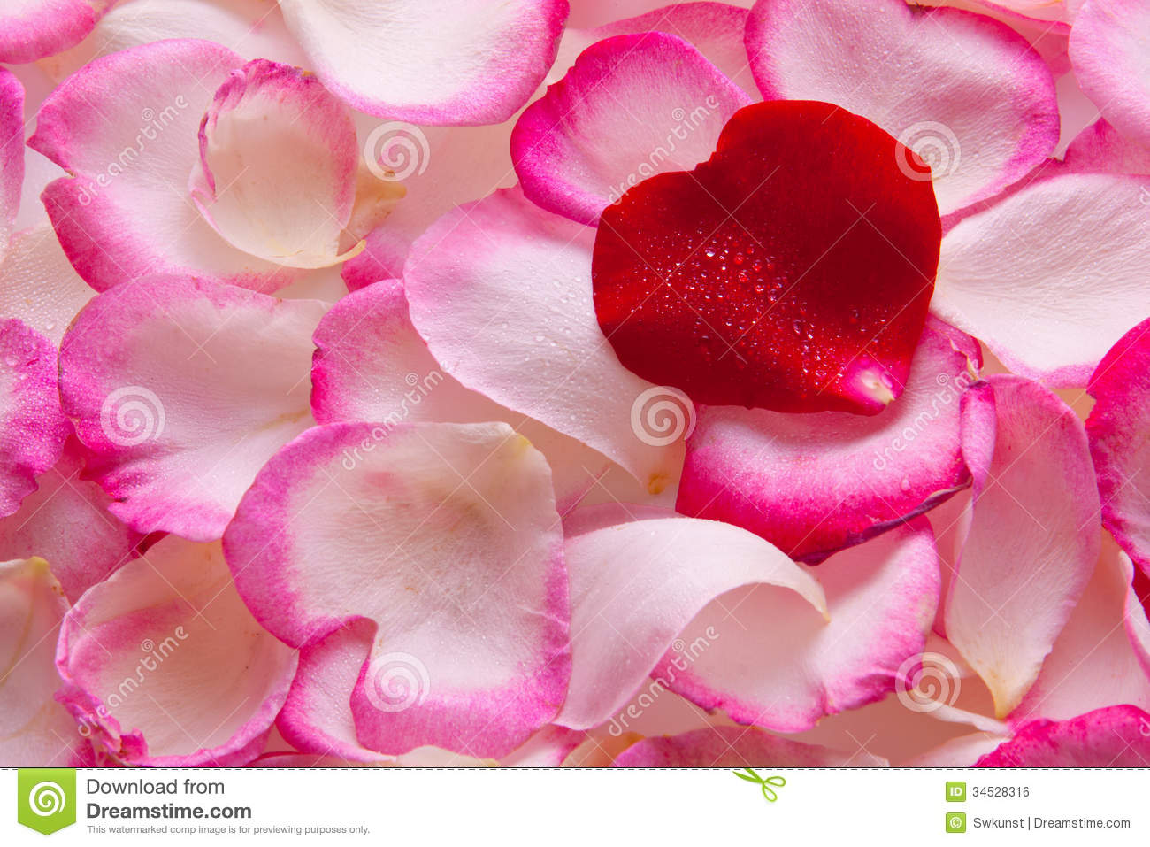 valentine rose petals heart. stock photography  image, Beautiful flower