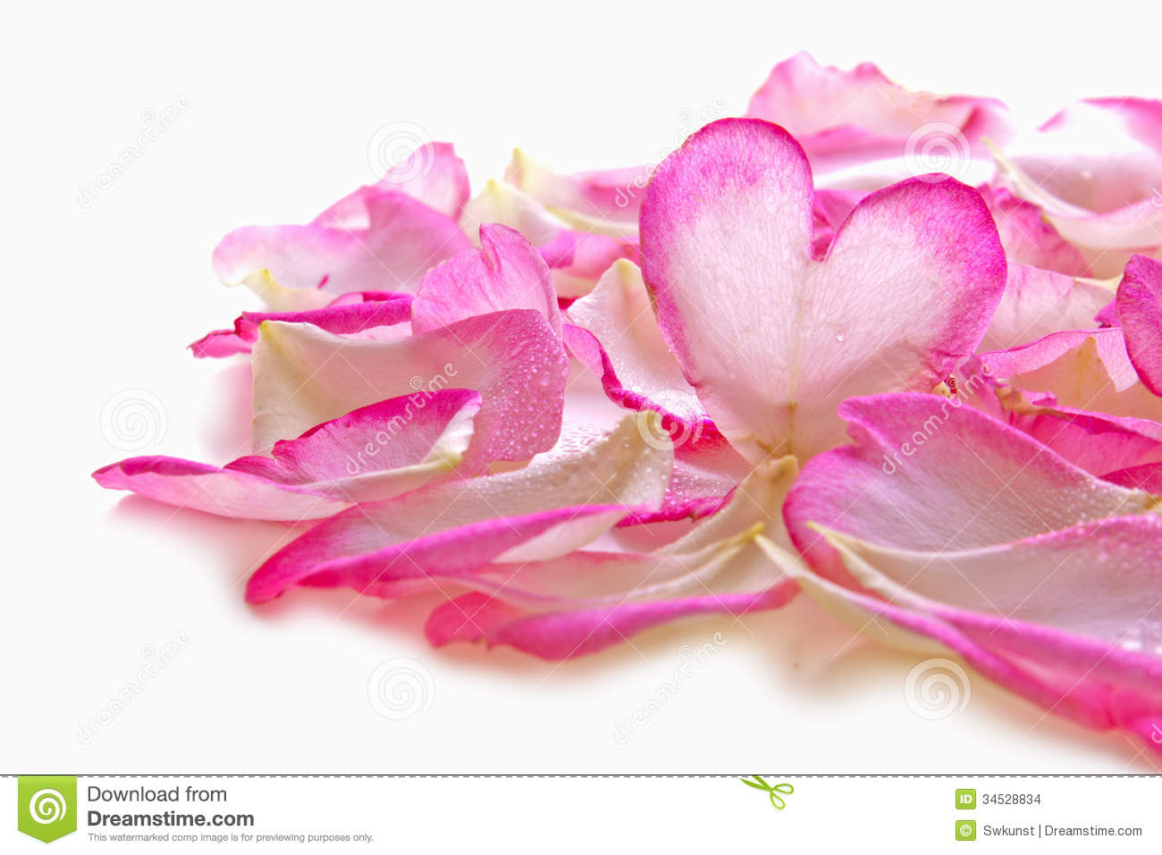 valentine rose petals heart. stock images  image, Beautiful flower