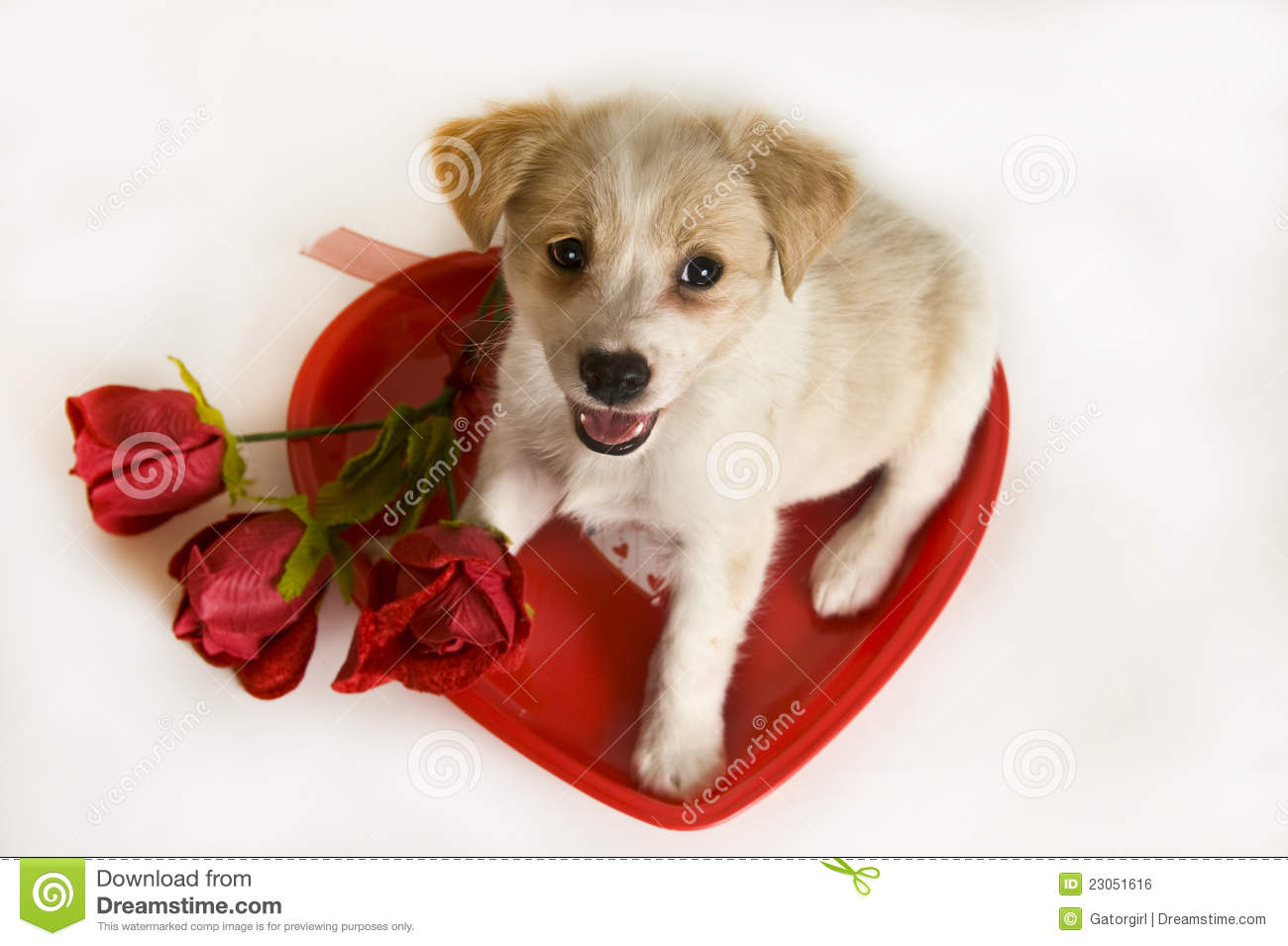 Großartig Valentine S Day Puppy With Heart And Roses