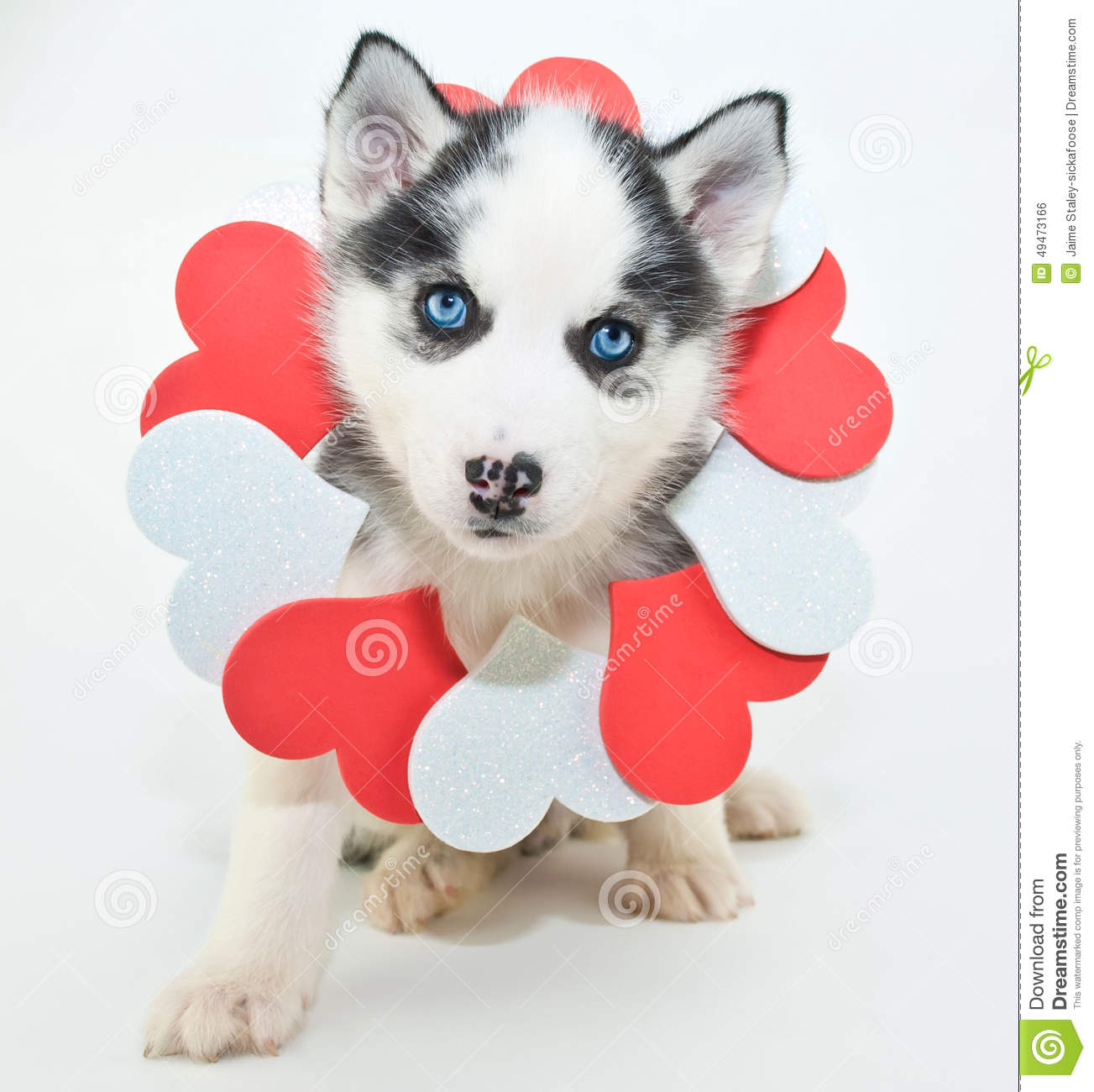 Valentine S Day Puppy