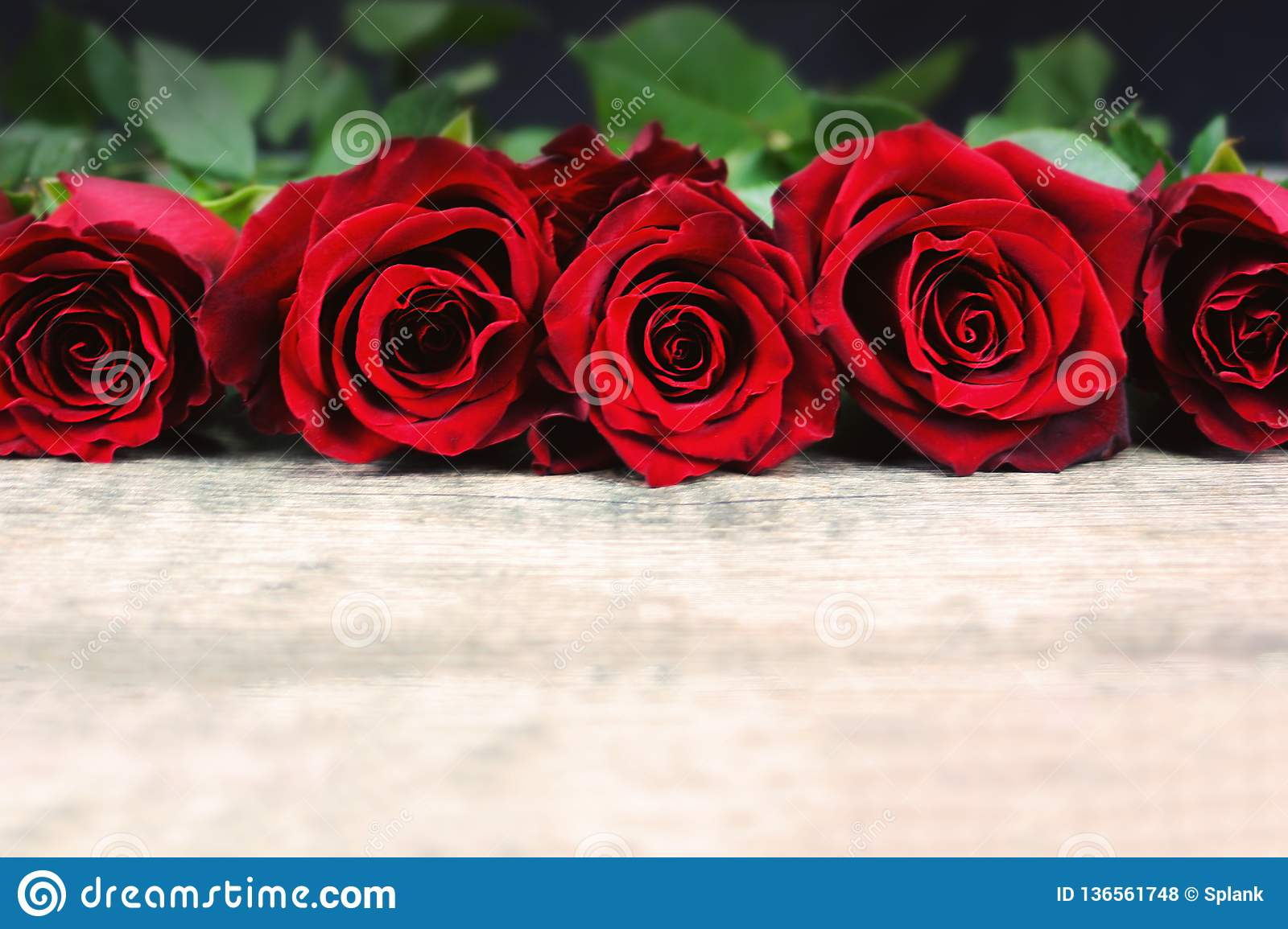 Valentine`s Day Roses in a Line on Rustic Wooden Background