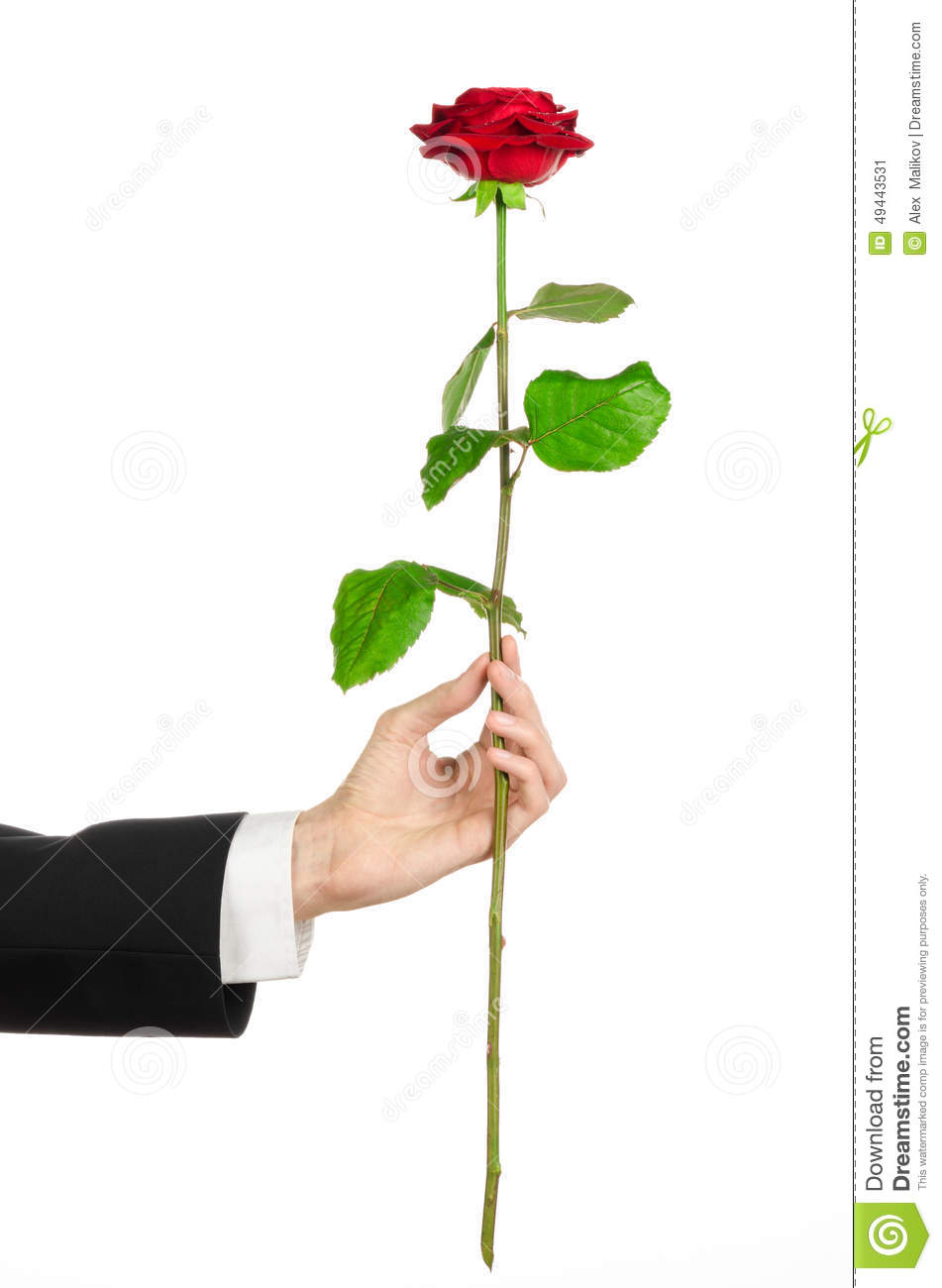 Valentine s Day and Women s Day theme: man s hand in a suit holding a red rose isolated on white background in studio