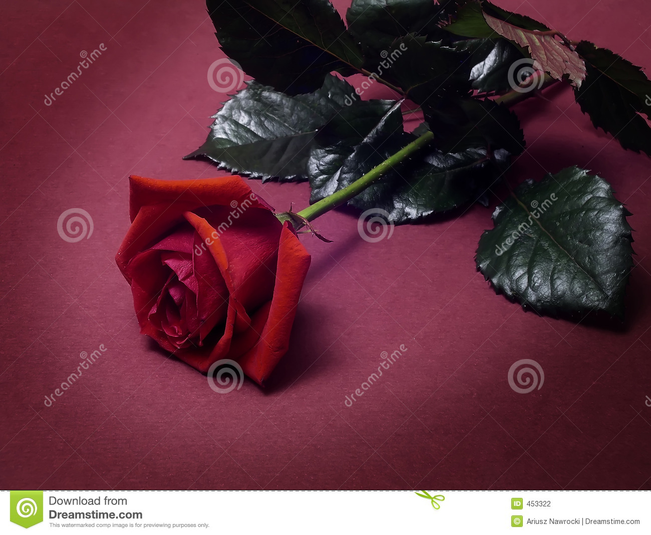 Download Valentines stock photo. Image of ornament, cupid, illustration - 453322
