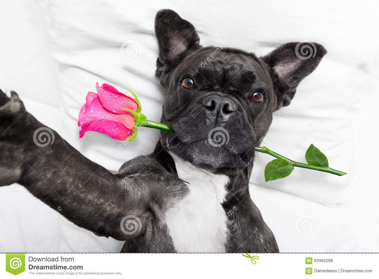 puppy wallpaper free download for mobile