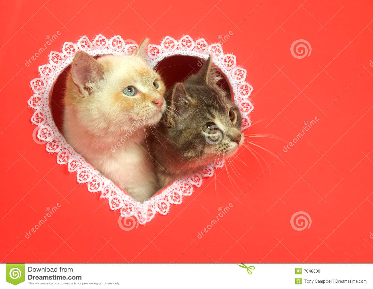 Valentines Day Kittens With Copy Space Stock Photo Image Of Love