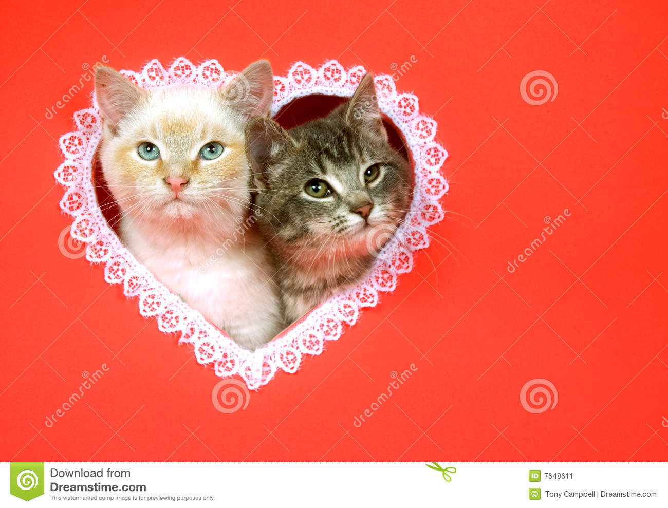Valentines Day Kittens With Copy Space Stock Image Image Of Kitten