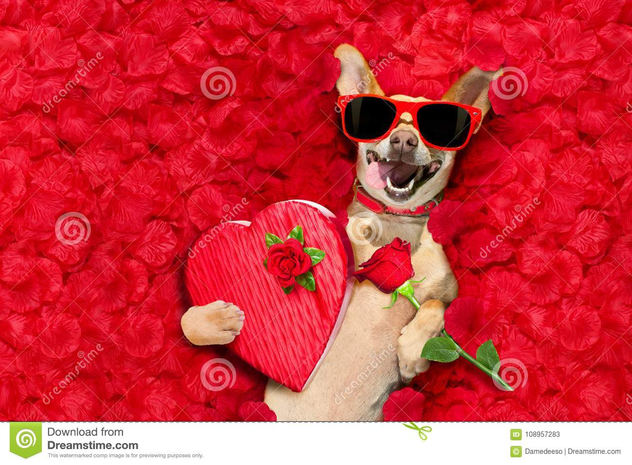 Valentines dog with rose petals