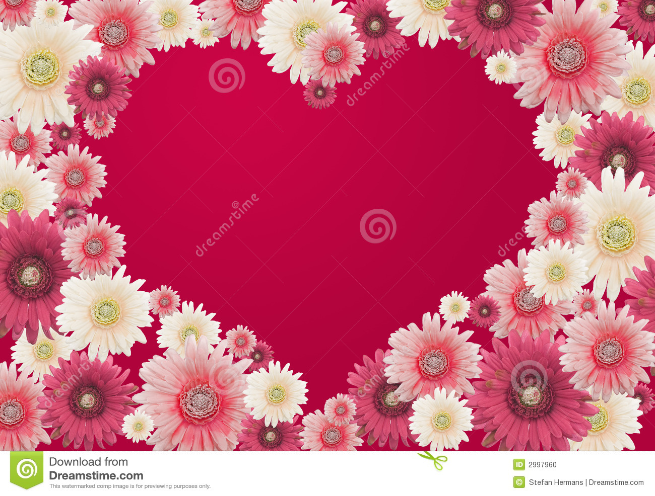 valentines flower card stock photo image 2997960