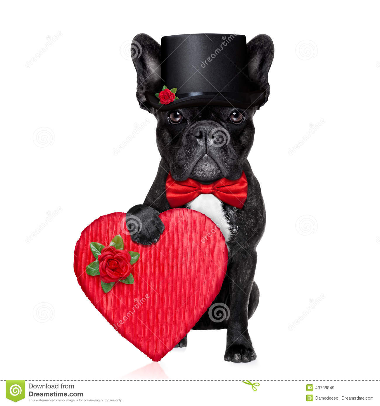 Valentines Groom Dog Stock Image Image Of Lover Banner