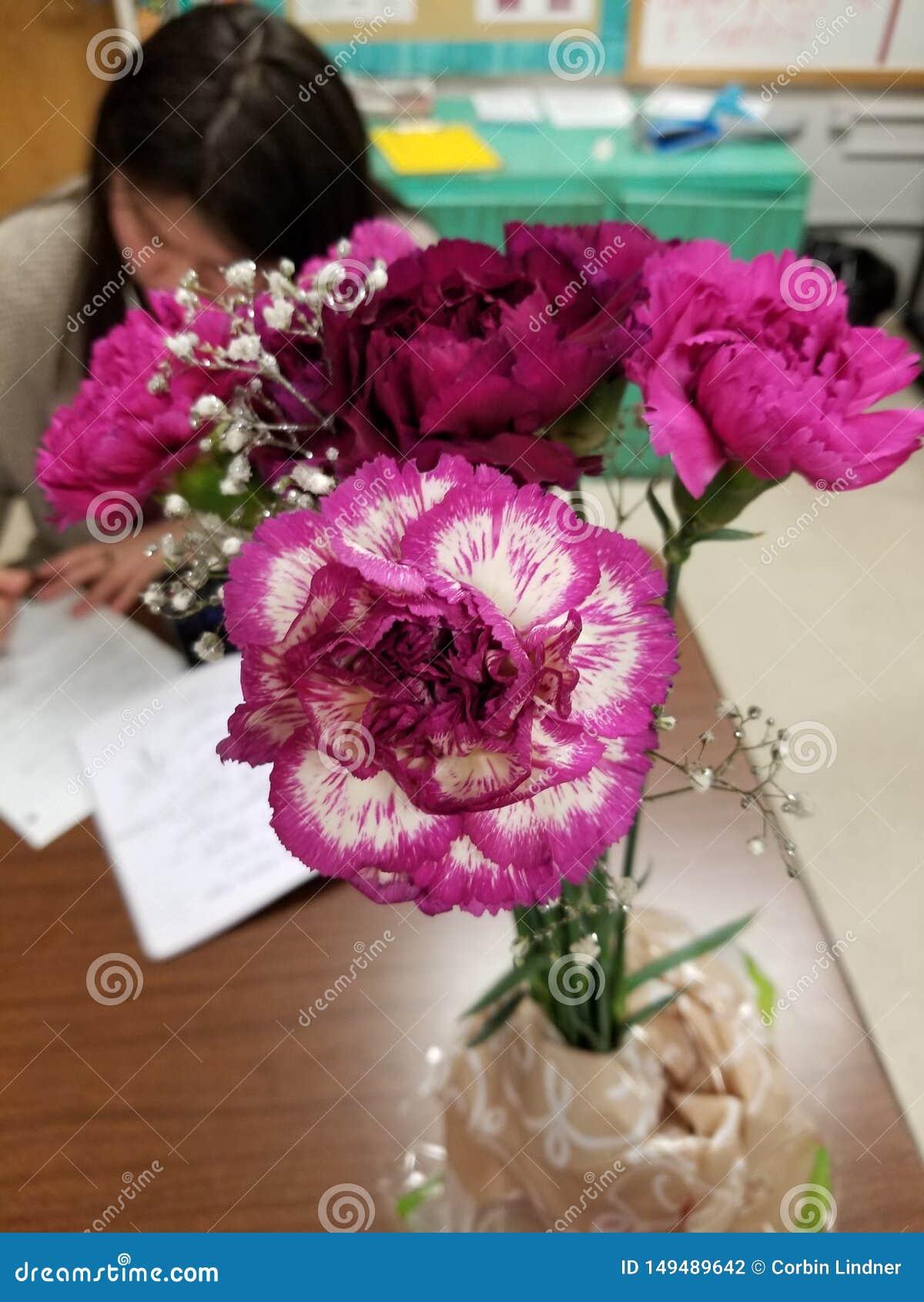 Valentinsgruß-Valorous Gartennelken
