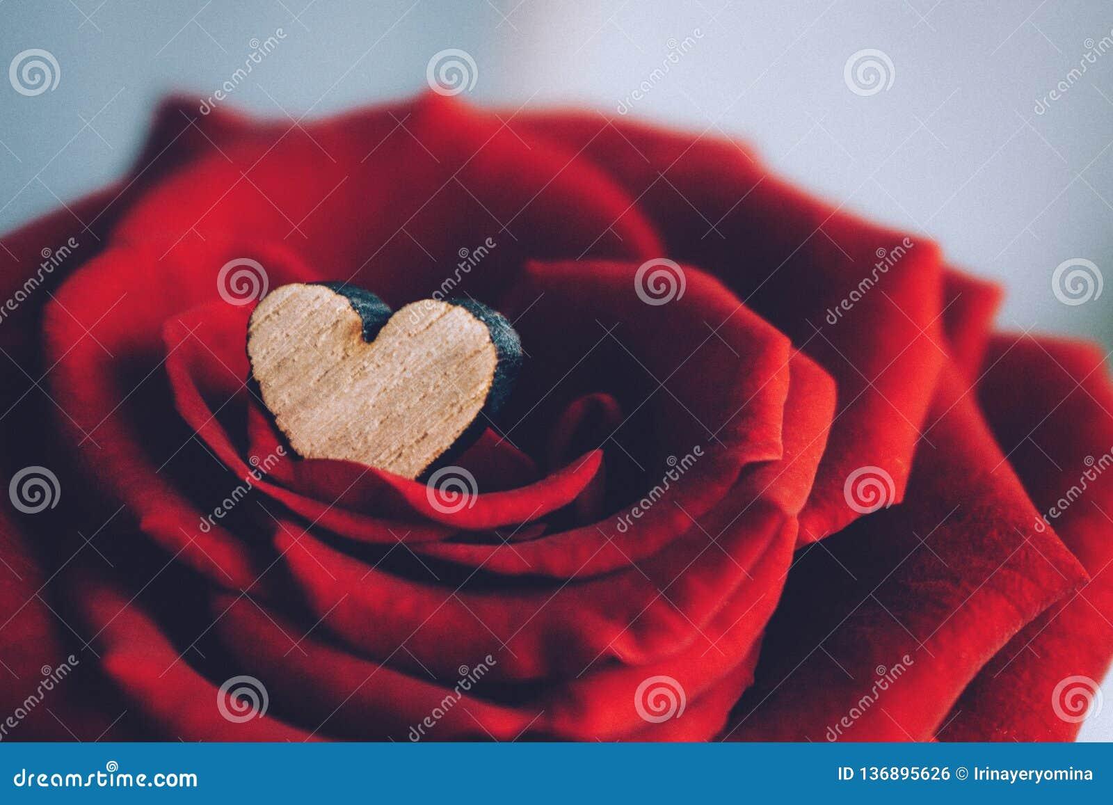 Valentinsgrußtagesgrußkarte, Hintergrund Kleines hölzernes Herz in den Blumenblättern der luxuriösen roten Samtrose Elegante delu