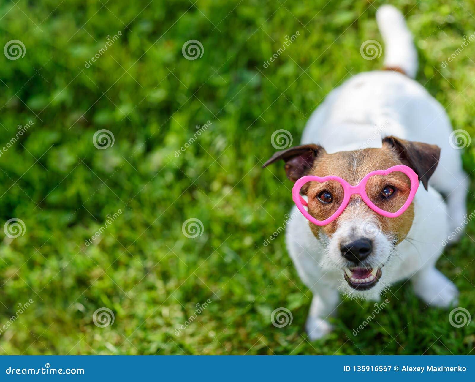 Valentinsgrußtageskonzept mit Hundetragendem Herzen formte die Gläser, die oben in Kamera schauen