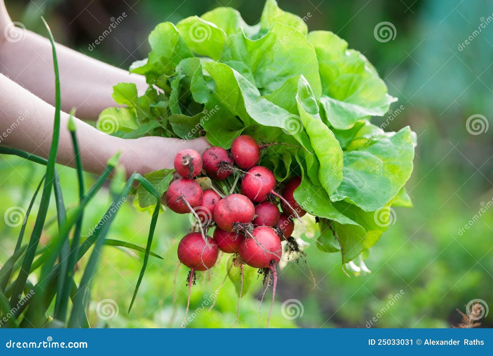 Valgrönsaker