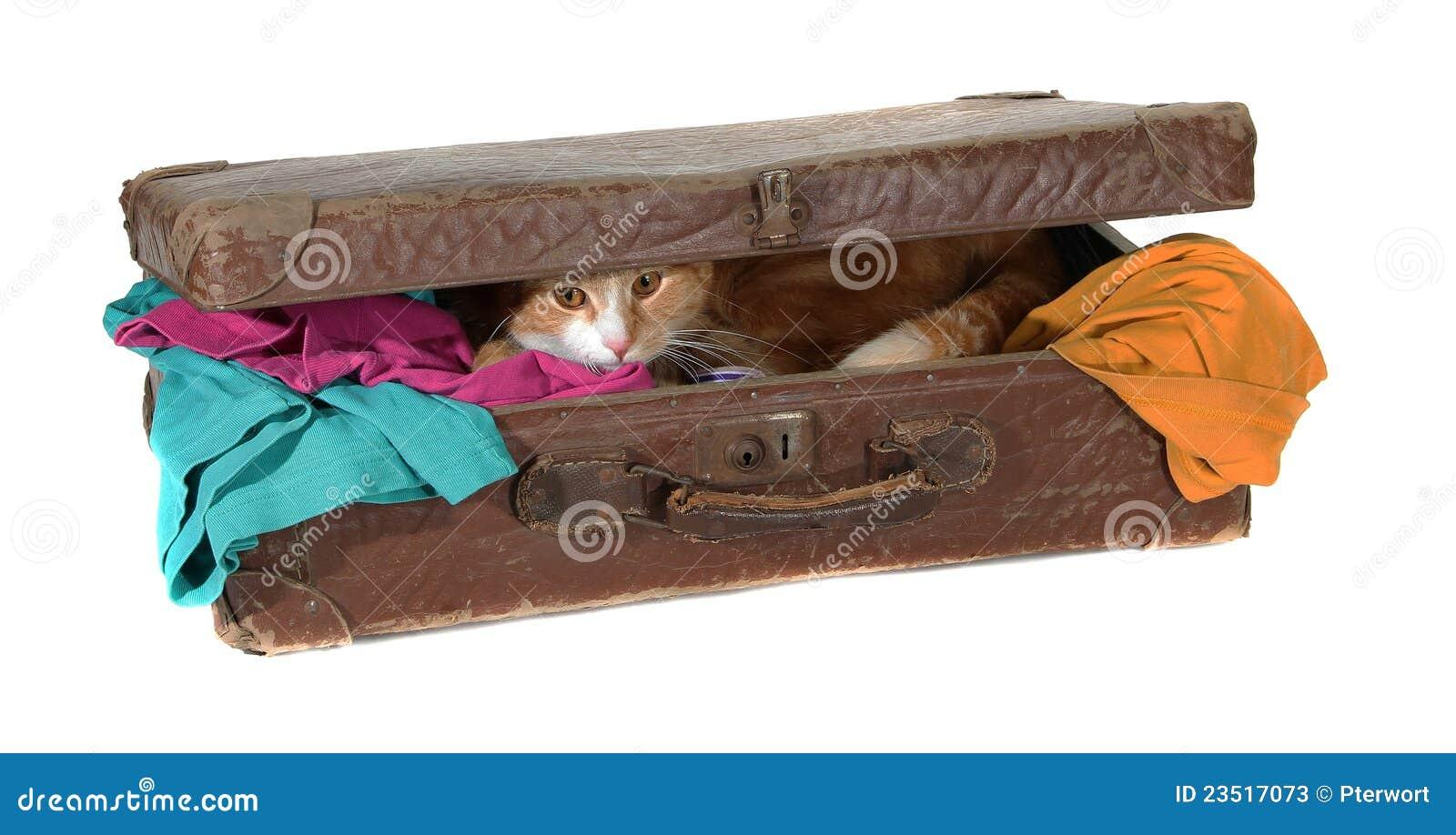 Valise fermée avec les vêtements et le tomcat mignon