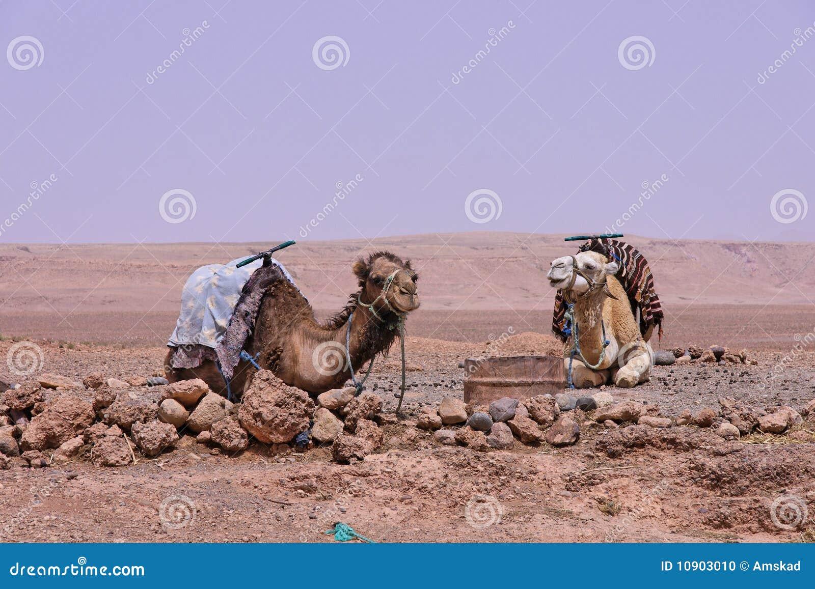Vallée de Draa près d Ouarzazate en M