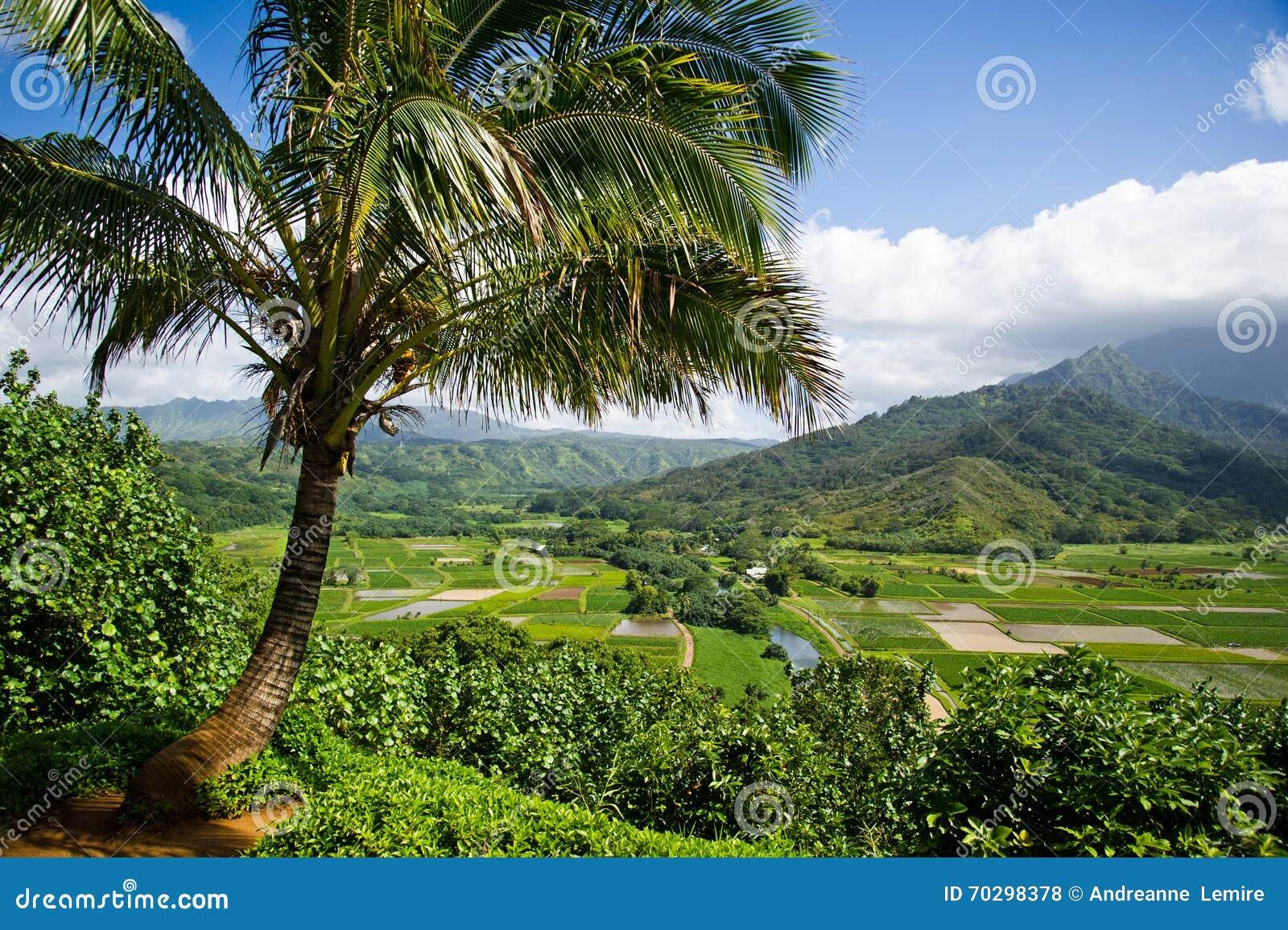 Vallée de Kauai de hanalei