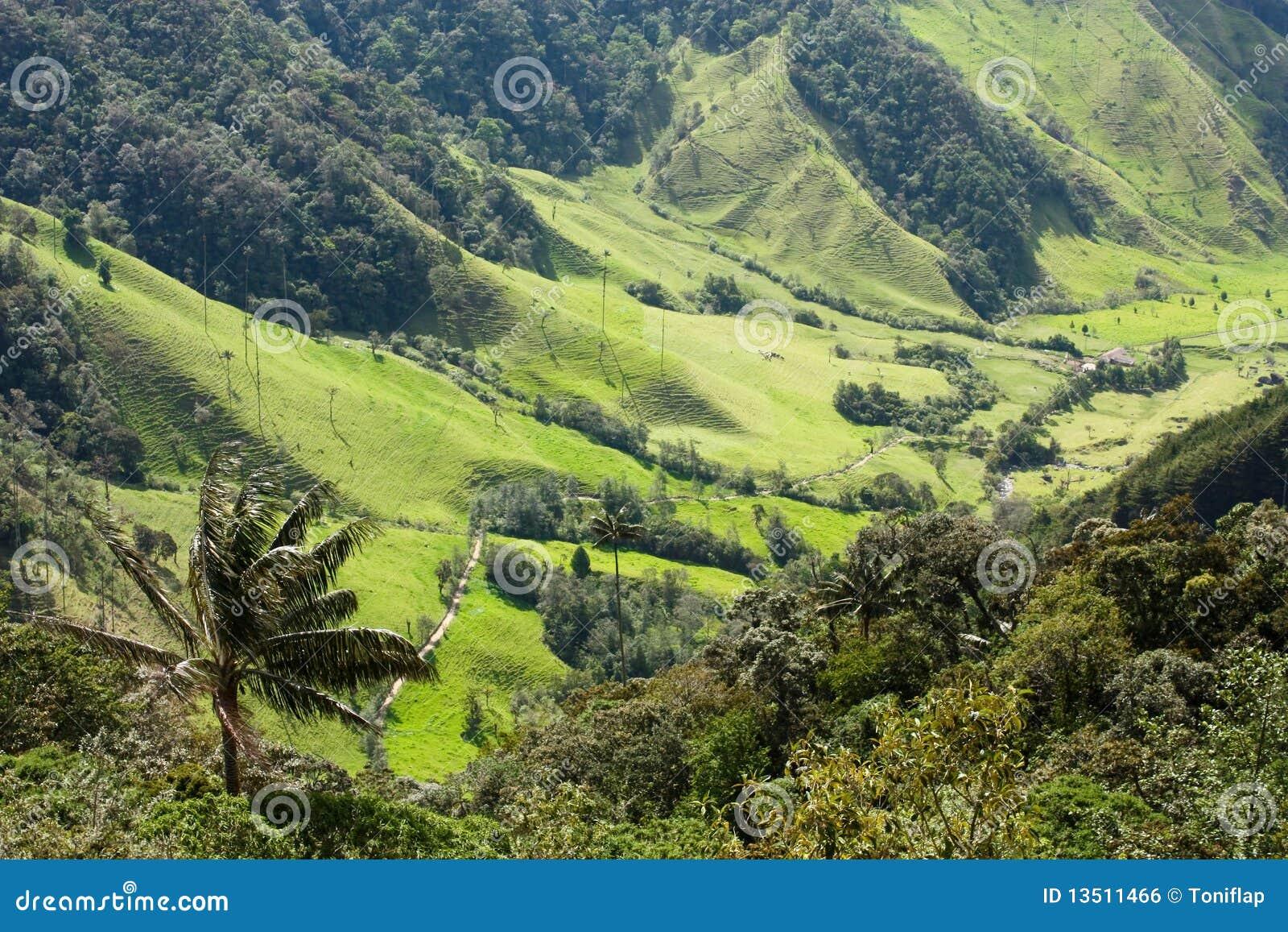 Valle de Cocora, parque natural de Colombia
