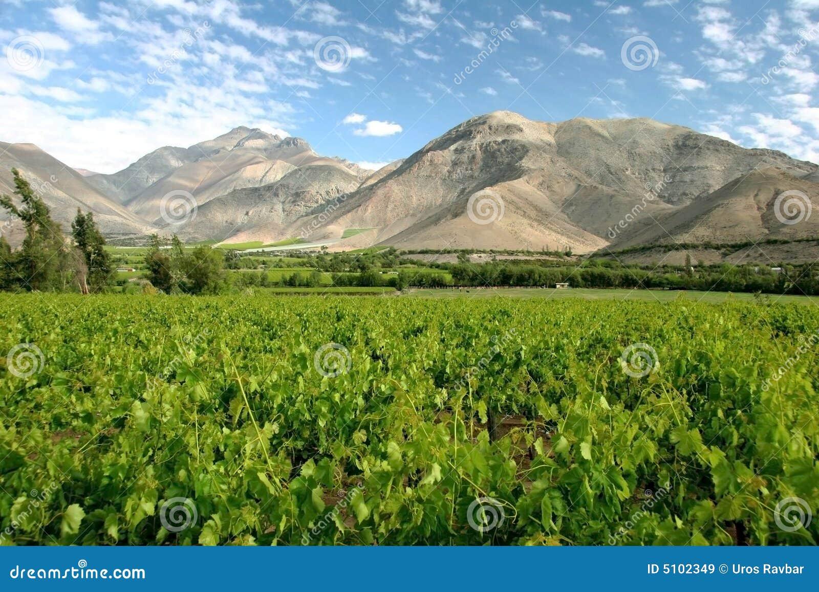 Valle del Elqui wijngaard