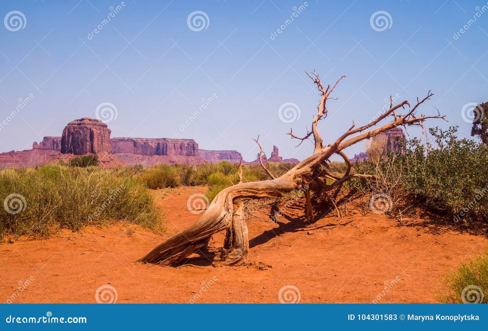 Valle del monumento nel primo mattino Rocce del monumento e degli alberi asciutti