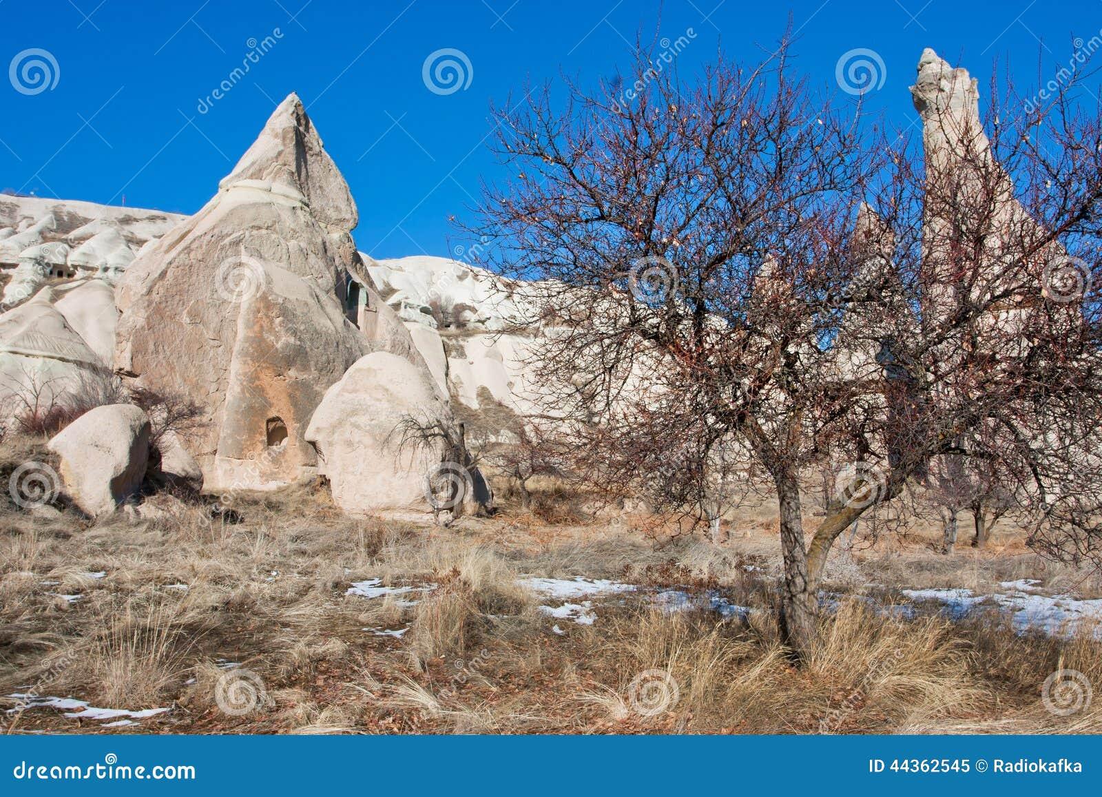 Valle della montagna con erba asciutta e gli alberi
