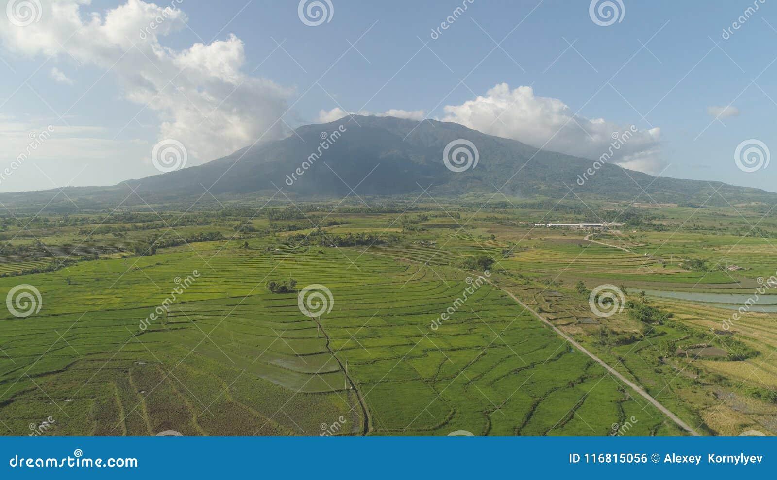Valle della montagna con i terreni coltivabili nelle Filippine