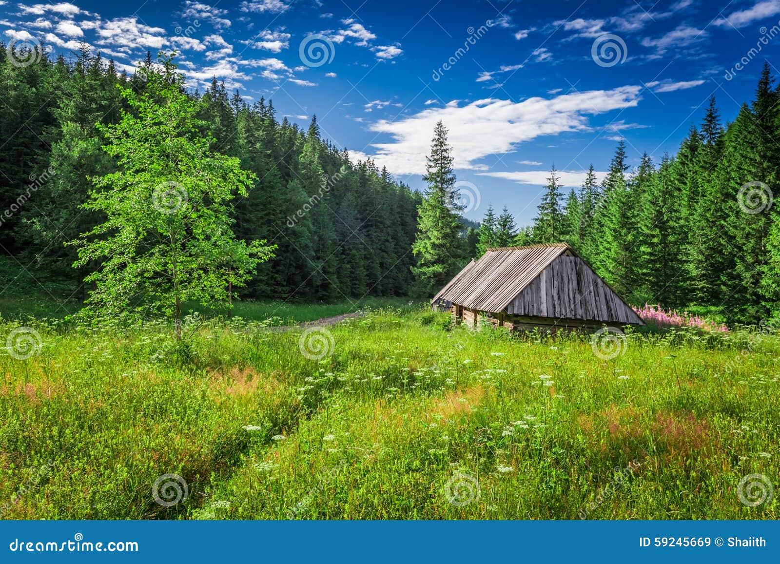 Valle en las montañas de Tatra en el verano