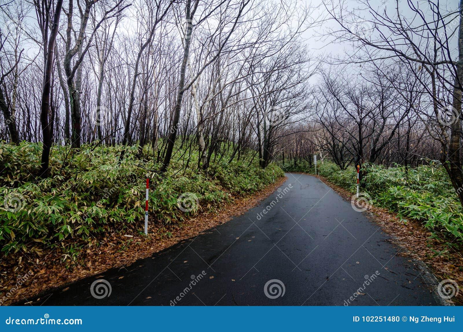 Valle hermoso de Jigokudani o del ` del valle del infierno del `
