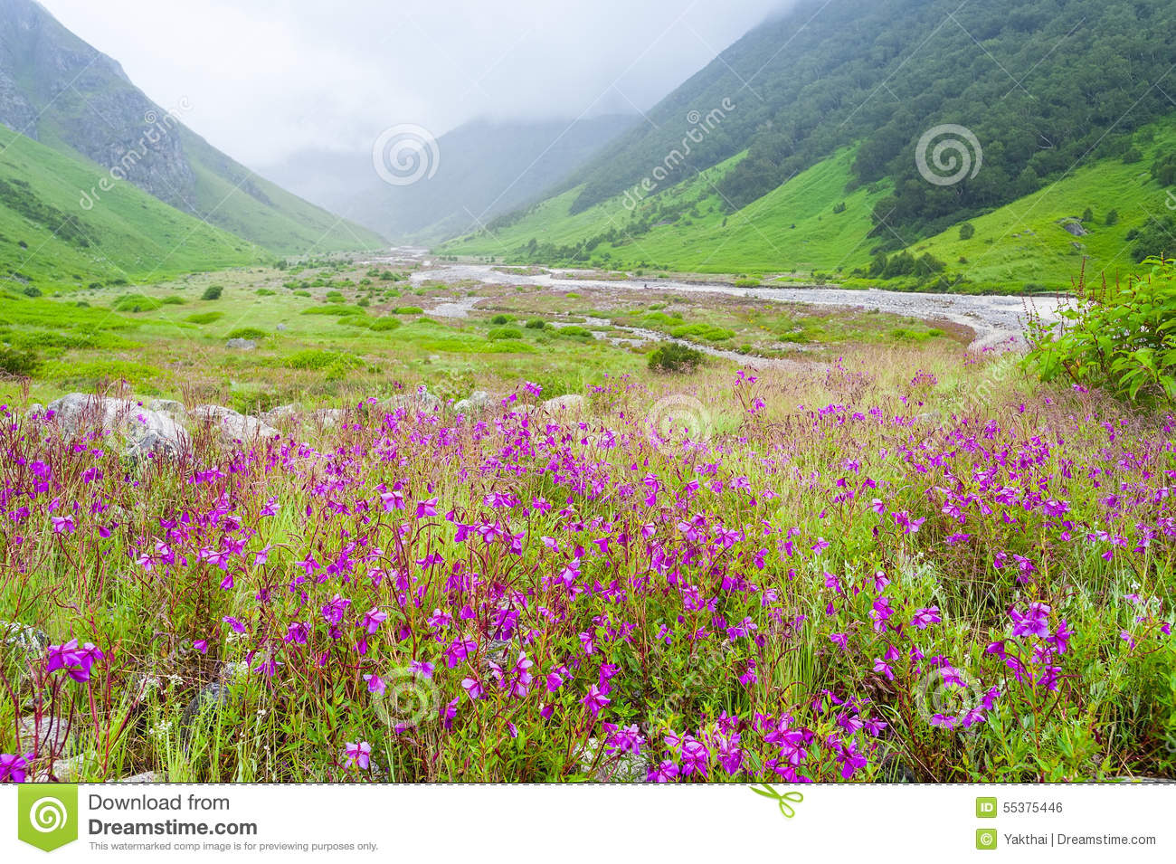 Valley Flowers India Stock Image