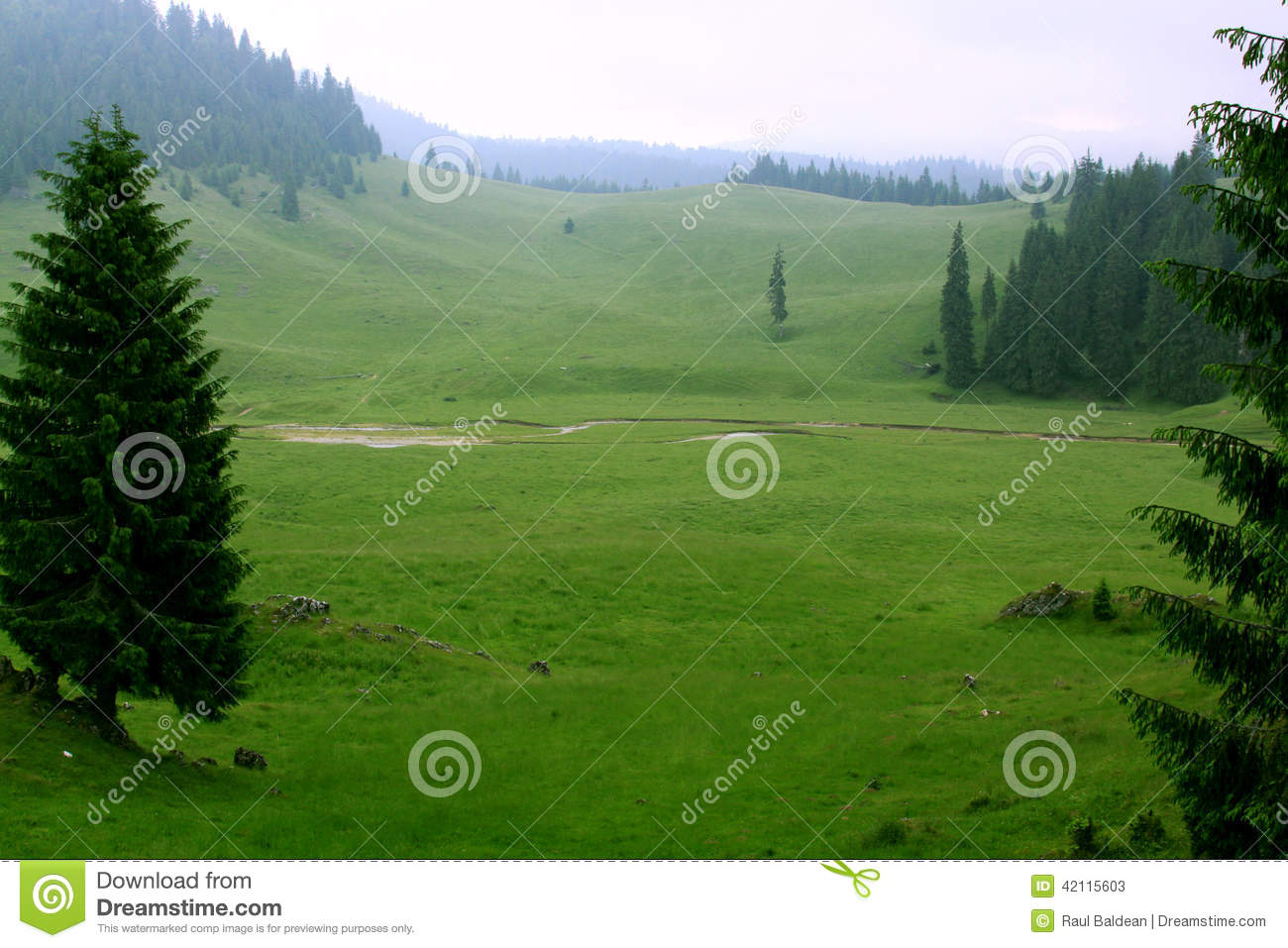 Valley with pine trees in the mountains