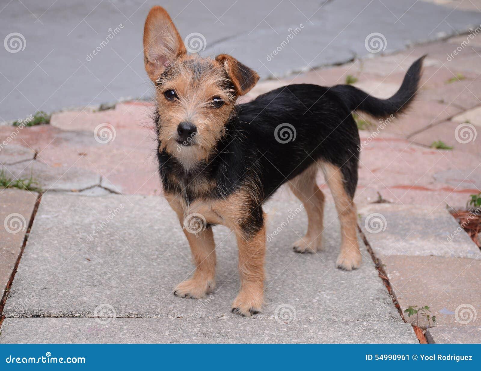 Valp härlig hund
