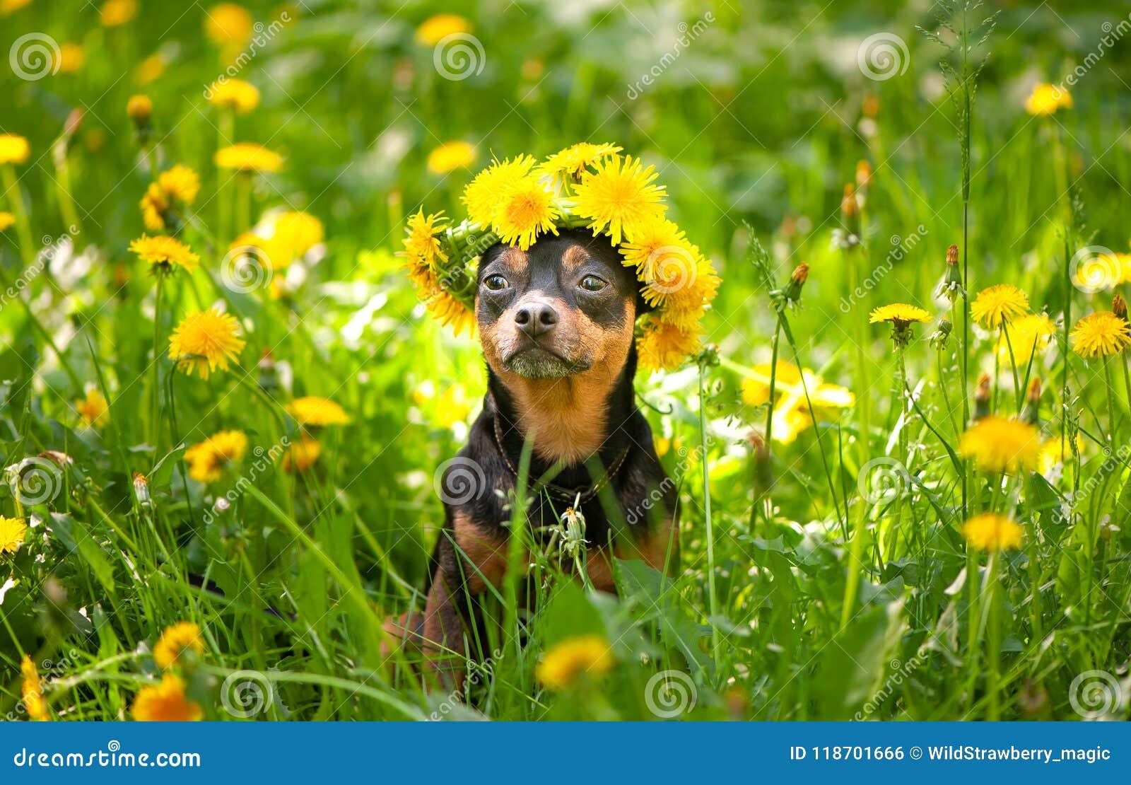 Valpen för Ð-¡ ute, en hund i en krans av våren blommar på en blomning