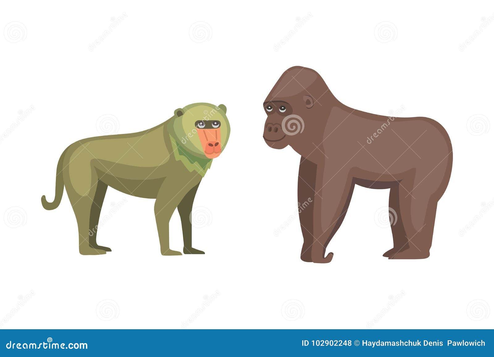 Van de bavianenaap en gorilla beeldverhaalillustratie het wild van Afrika