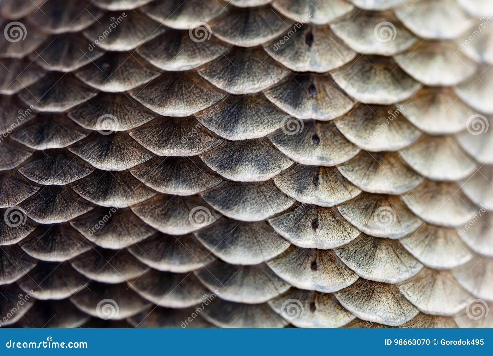 Van de de huidtextuur van vissenschalen de macromening De geometrische karper Carassius van Crucian van de patroonfoto geschubd m