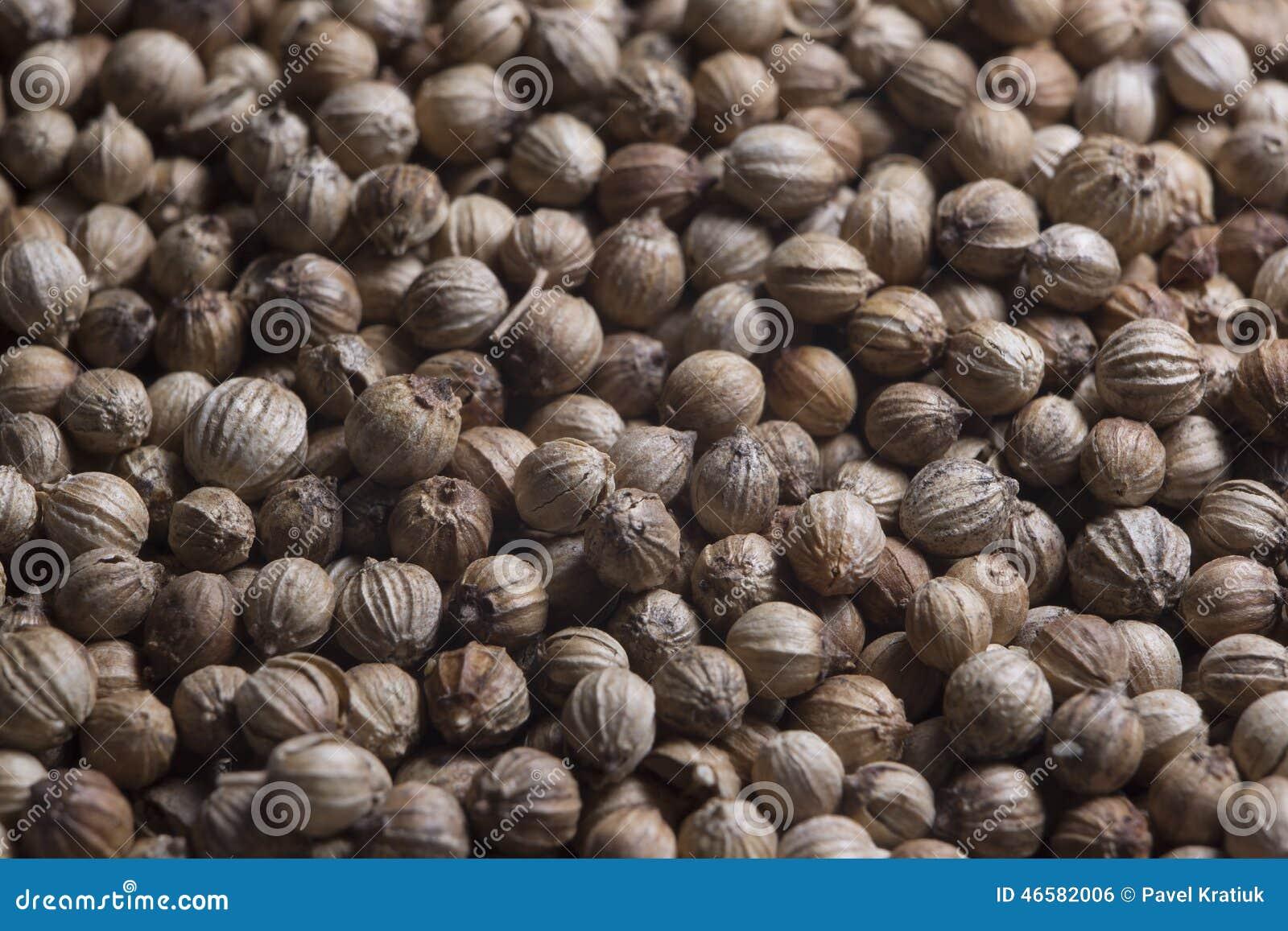 Van de de kruidenspecerij van de specerijkoriander de korianderkorrel coriandre
