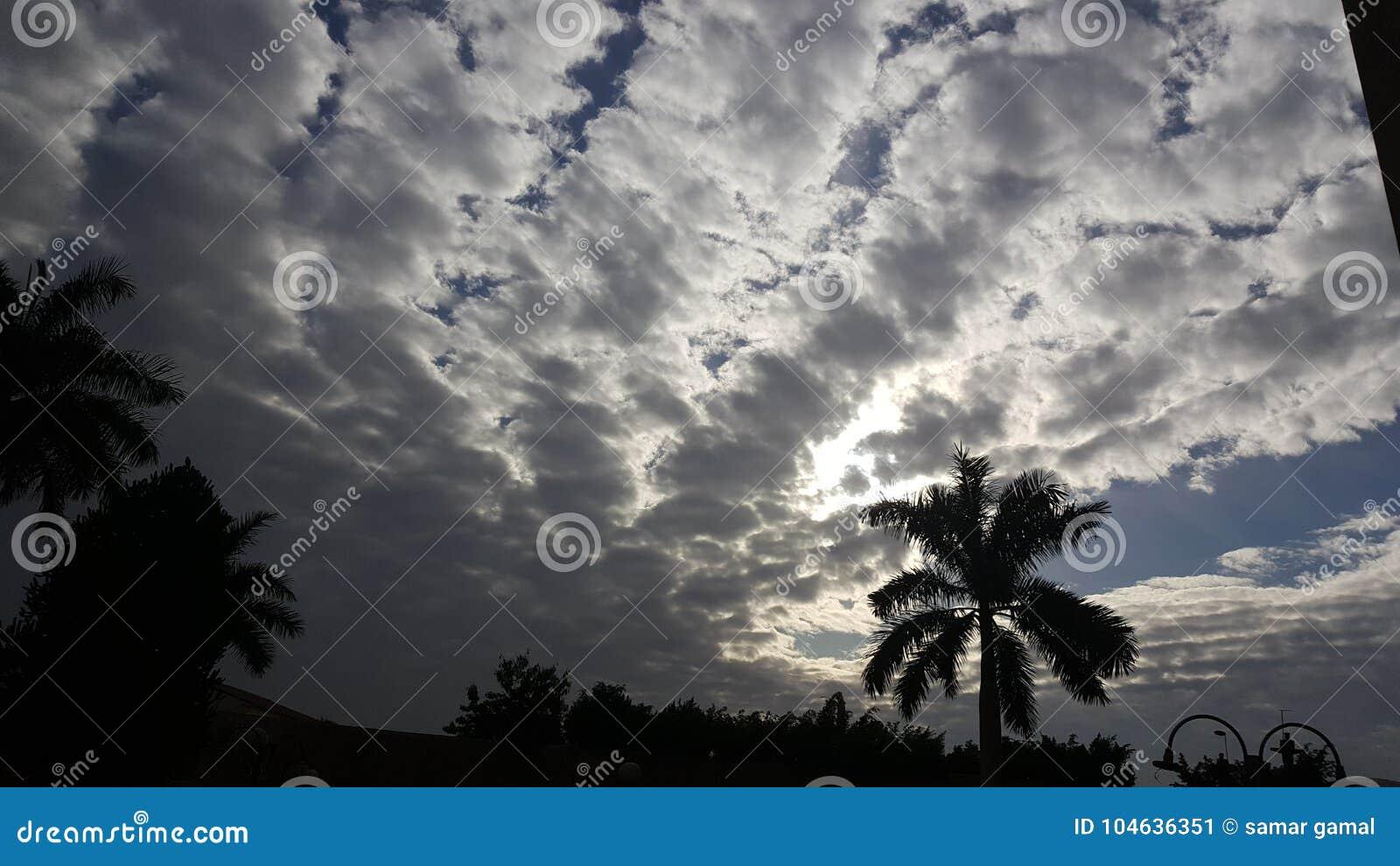 Download Van De De Hemelochtend Van De Wolkendag De Palmzonsondergang Het Winteriscoming Stock Afbeelding - Afbeelding bestaande uit ochtend, palm: 104636351