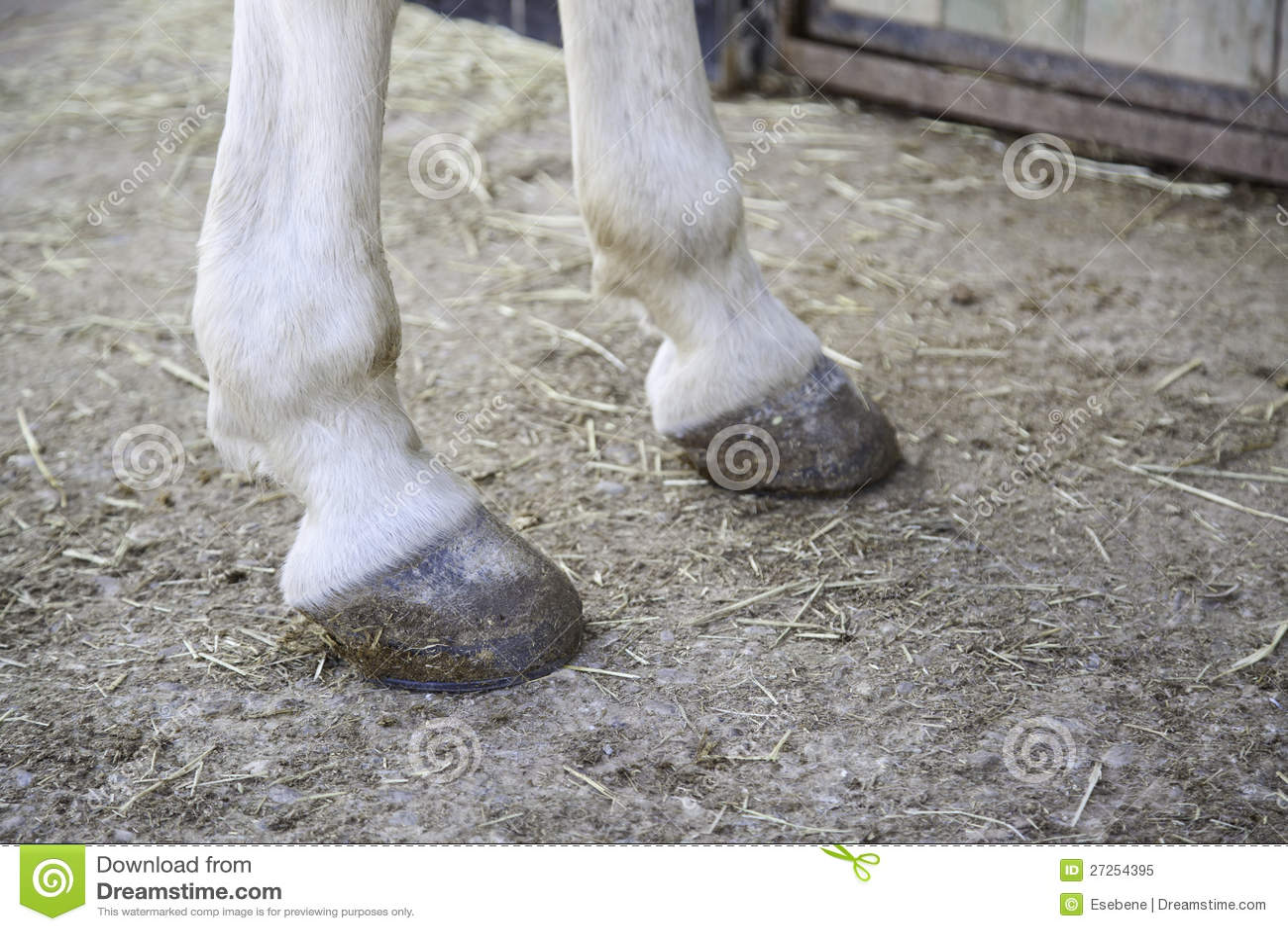 Van de paardvoeten hoef
