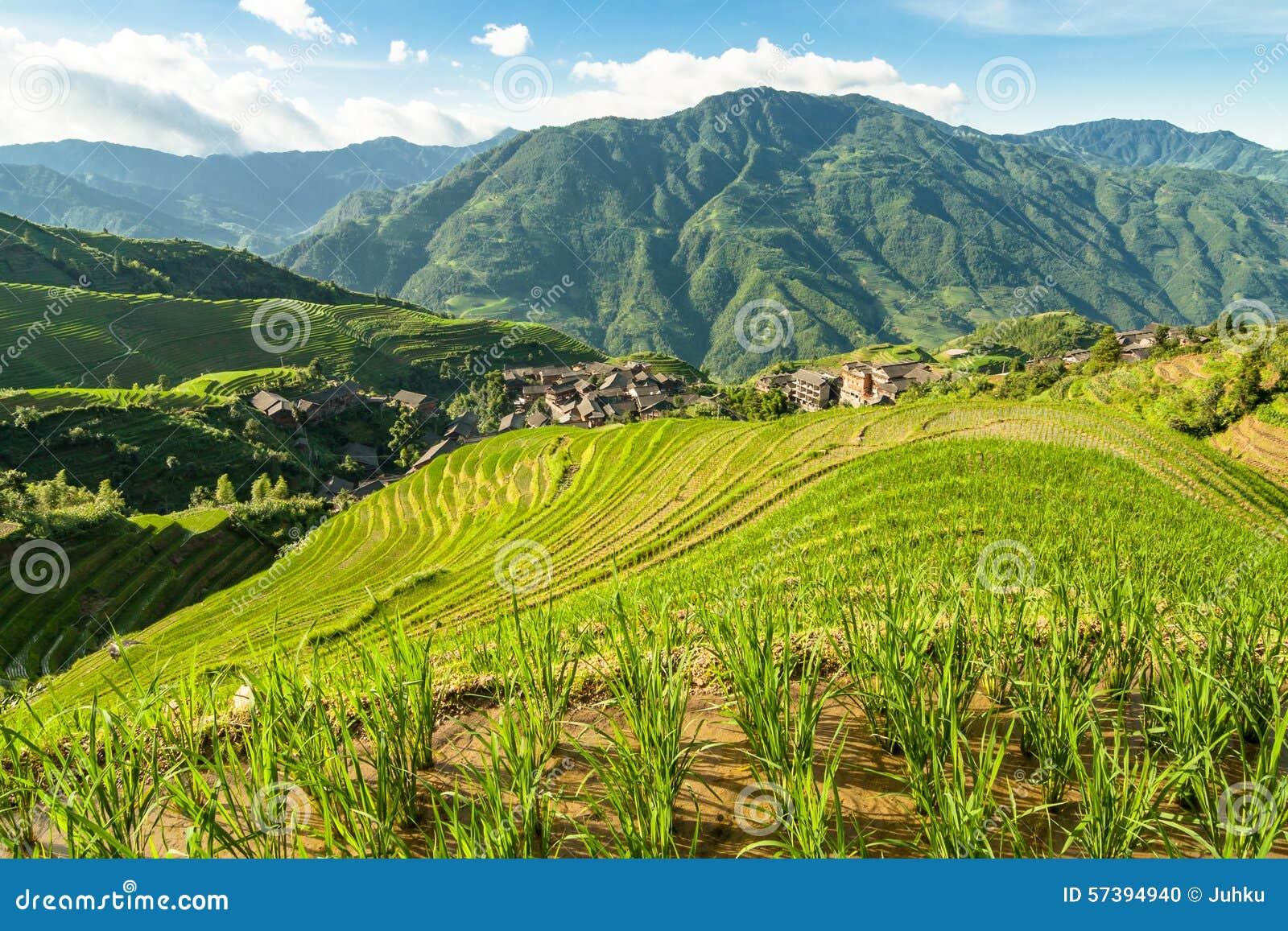 Van de terrassenguilin van de Longshengrijst het landschap van China