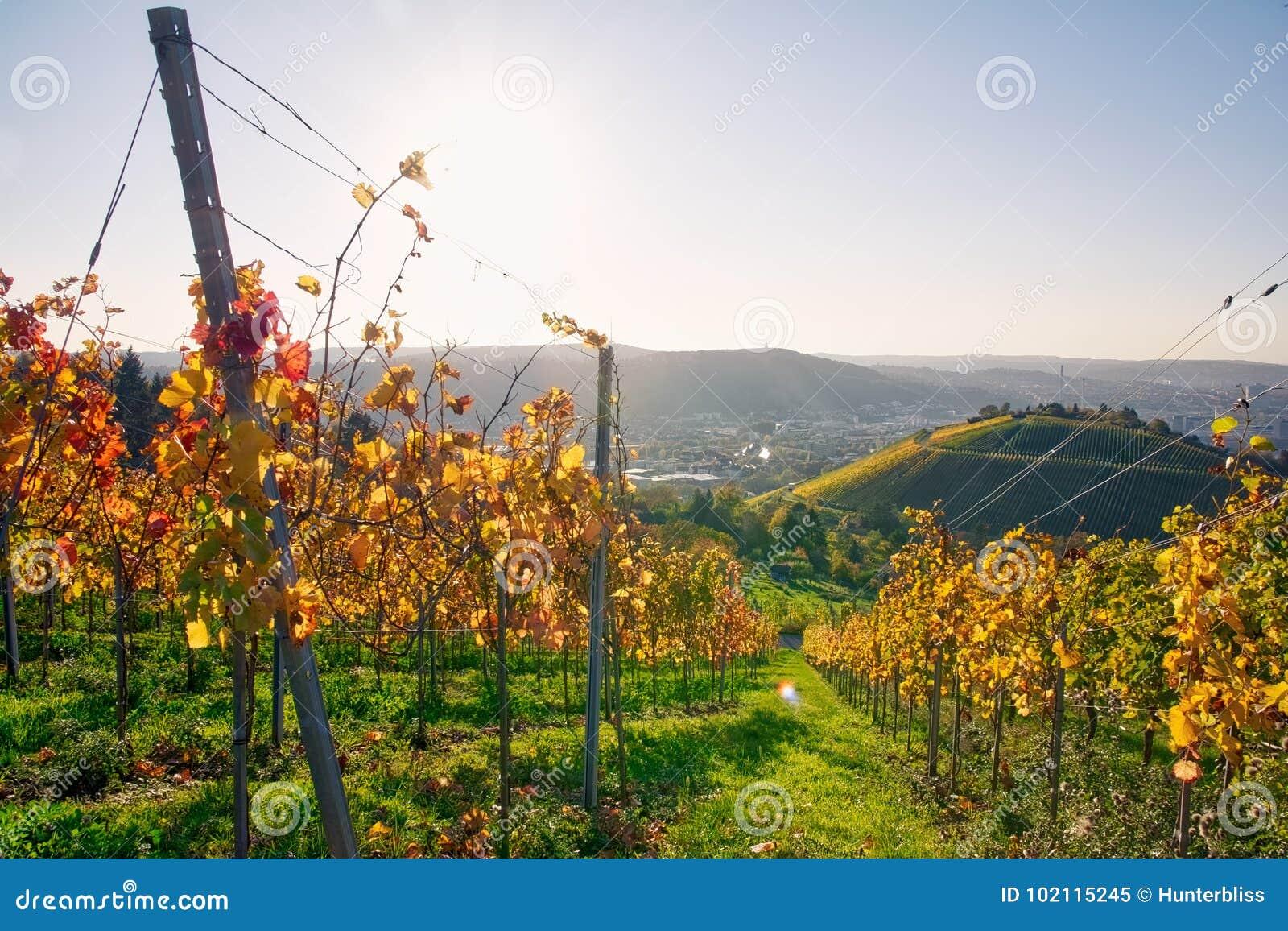 Van de Wijn de in openlucht Dag Veranderende Seizoenen van wijngaardrijen de Dalingsherfst
