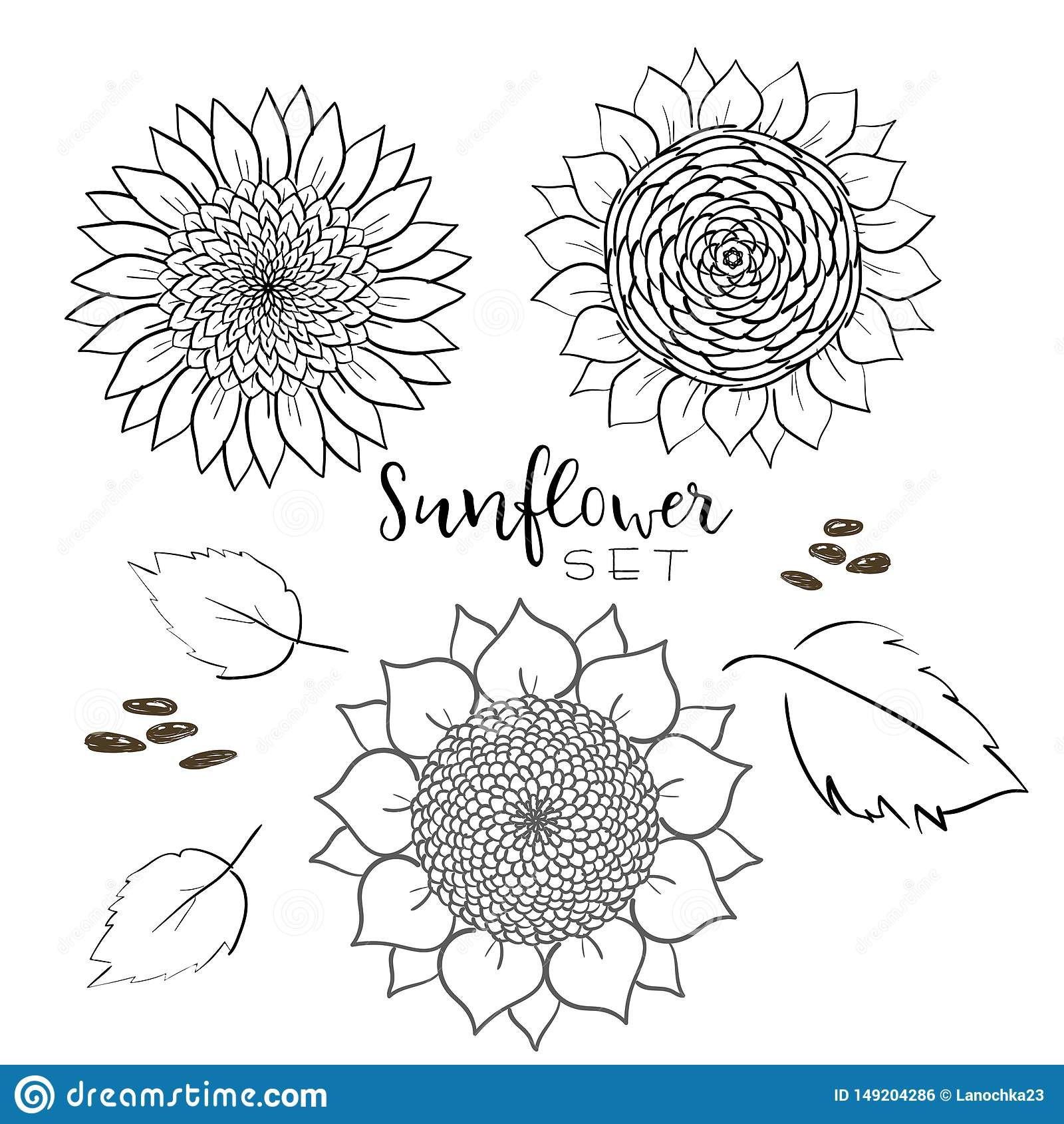 Van de zonnebloemzaad en bloem reeks van de lijn de vectortekening Hand getrokken ge?soleerde illustratie De uitstekende schets v