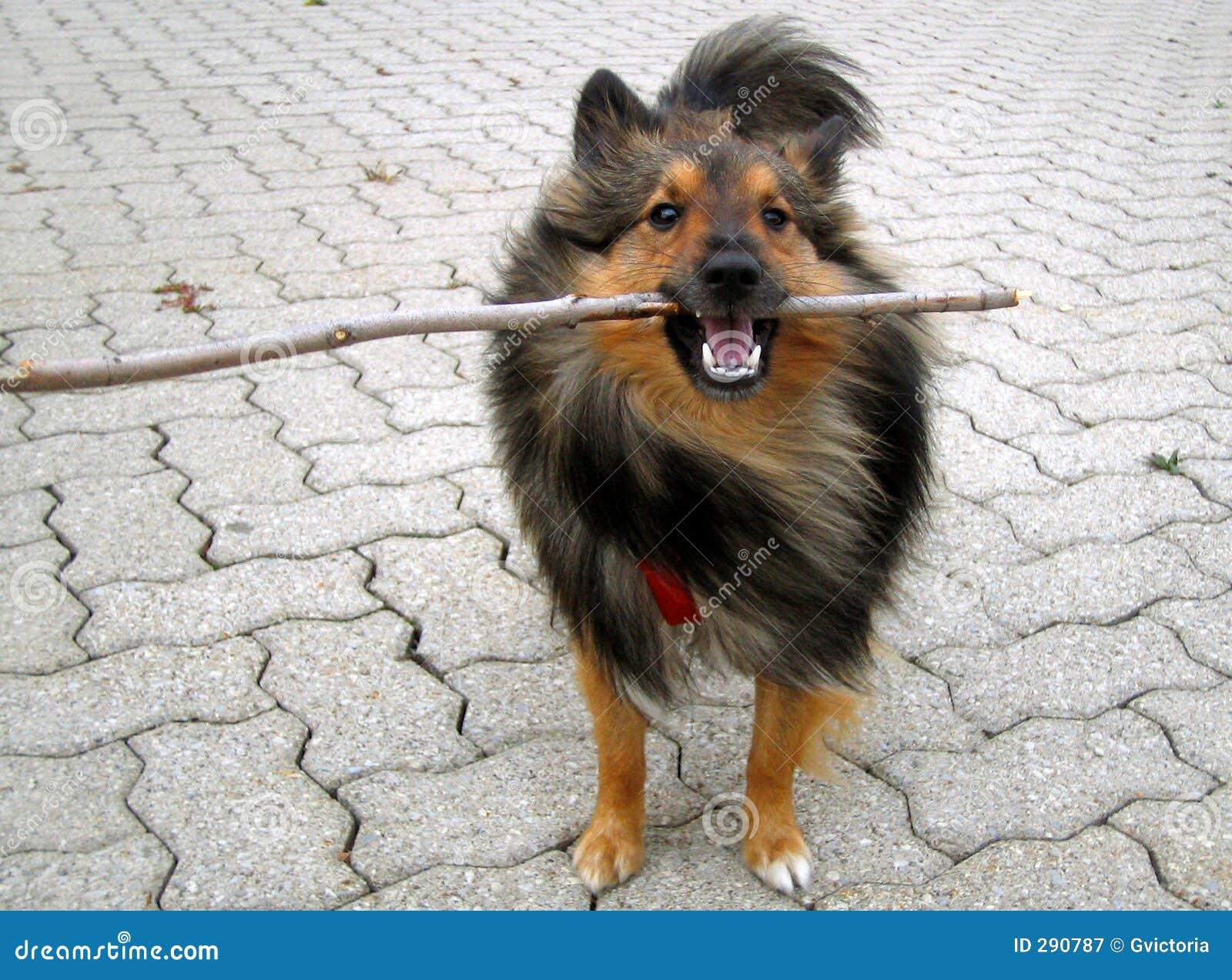 Van een hond stok