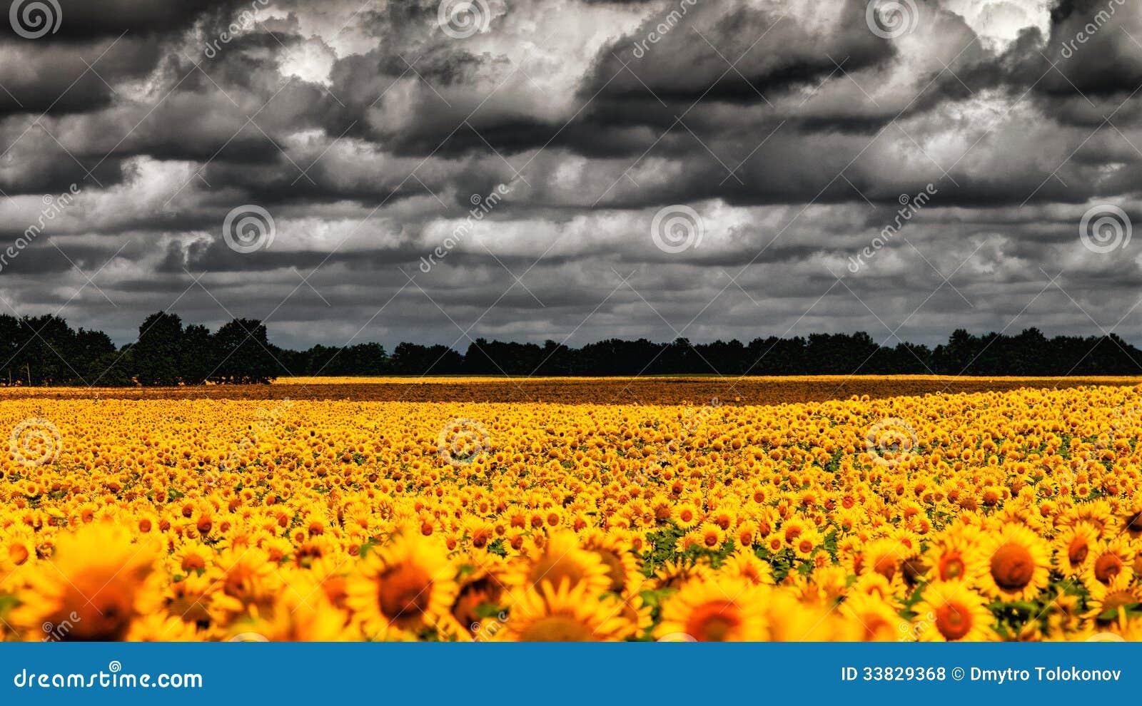 Van Gogh Summer.