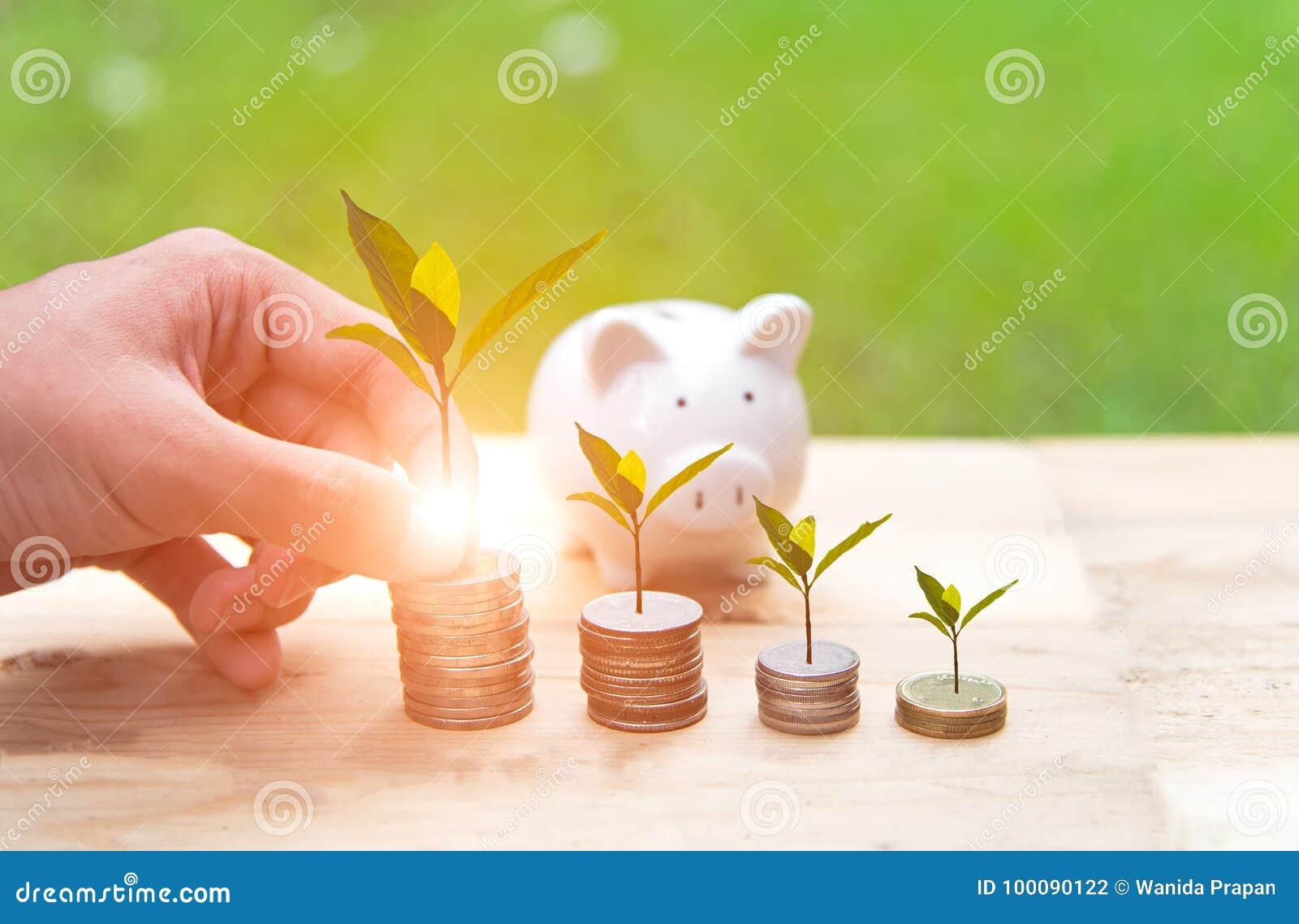 Van het de holdingsmuntstuk van de mensenhand het gelddekking het groeien plant en spaarvarken met geldmuntstukken in besparingsg