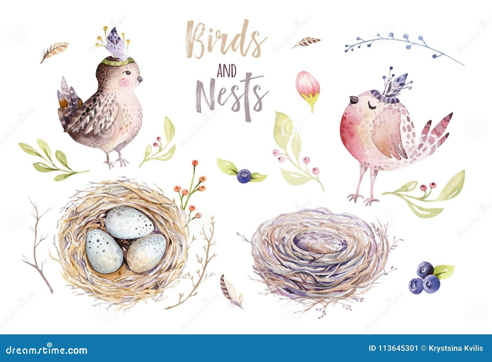 Van het de waterverf de de vliegende beeldverhaal van Pasen van de handtekening vogel en eieren met bladeren, takken en veren Het