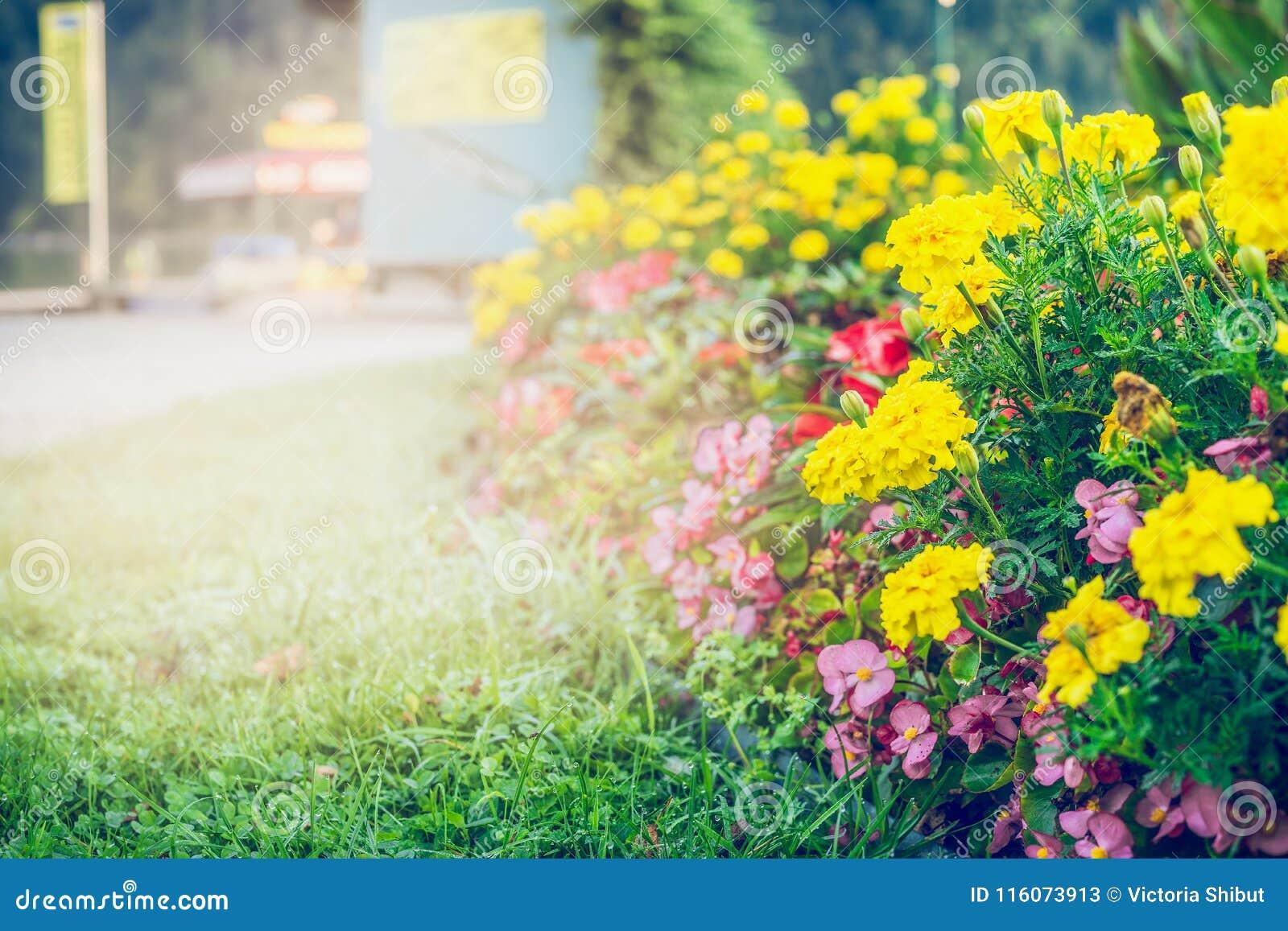 Van het de zomertuin of park het modelleren met mooi bloemenbed