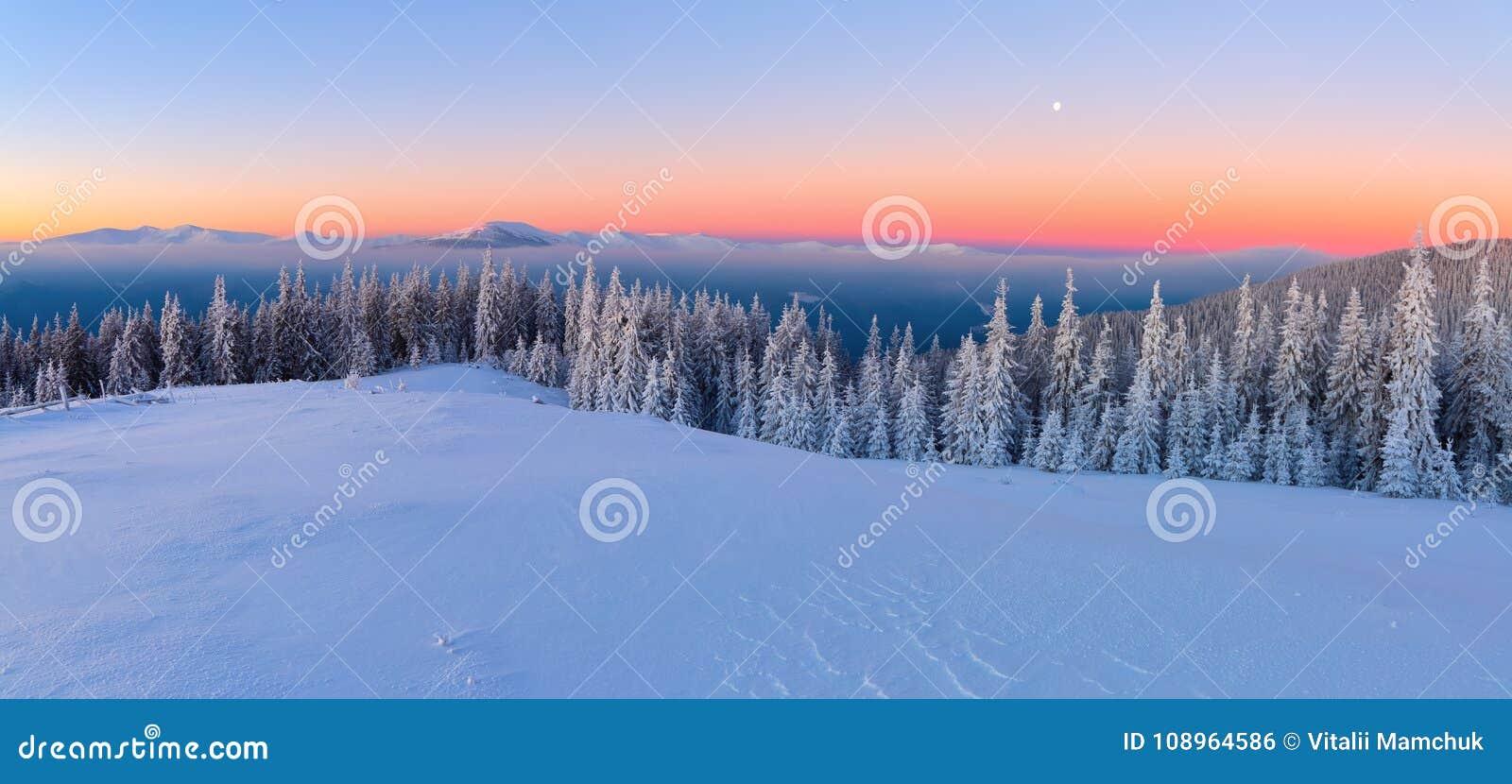 Van het gazon, met sneeuw wordt behandeld, een panorama van behandeld met vorstbomen, mist, lange, steile bergen die