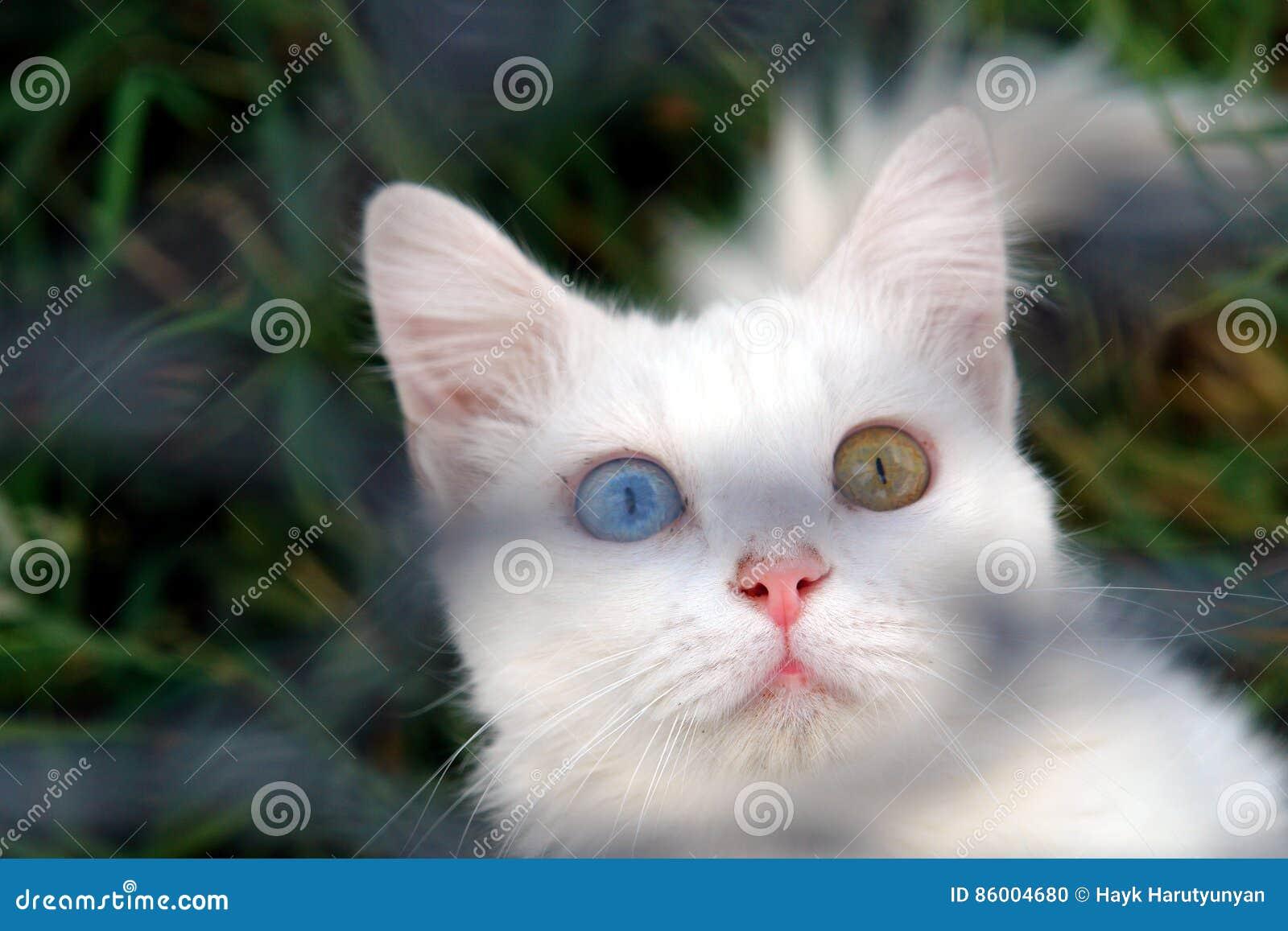 Van Kot Zdjęcie Stock Obraz Złożonej Z Rzadki Trawy 86004680